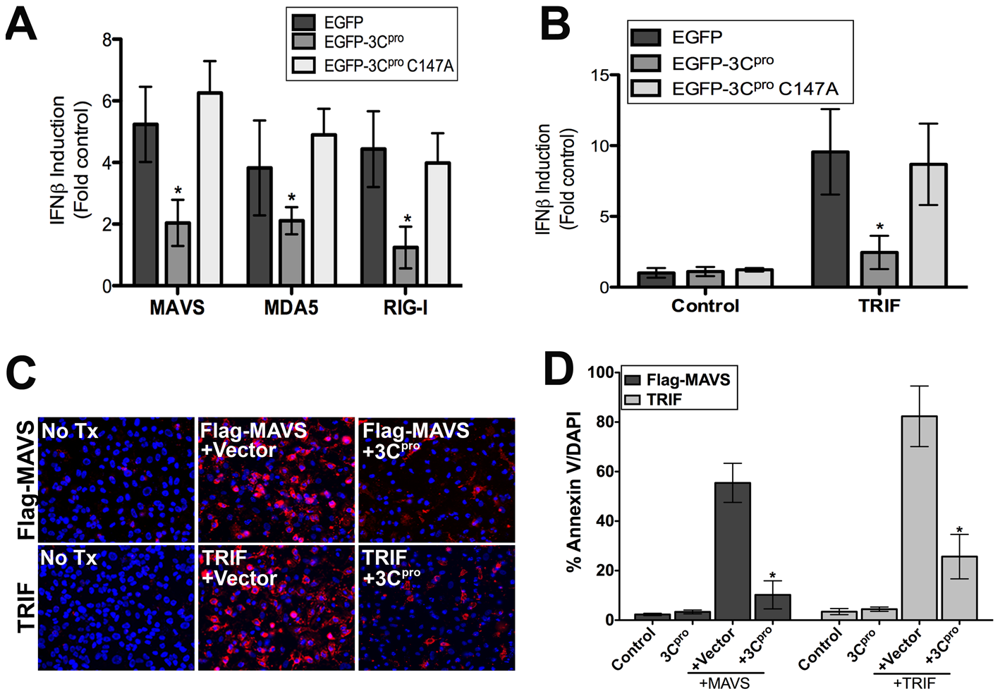 3C<sup>pro</sup> abrogates MAVS and TRIF Type I IFN and apoptotic signaling.