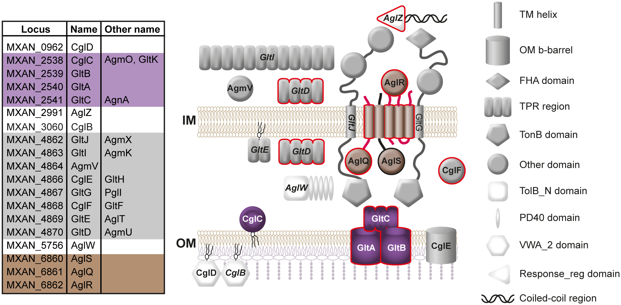 Subcellular localization of proteins required for gliding motility.