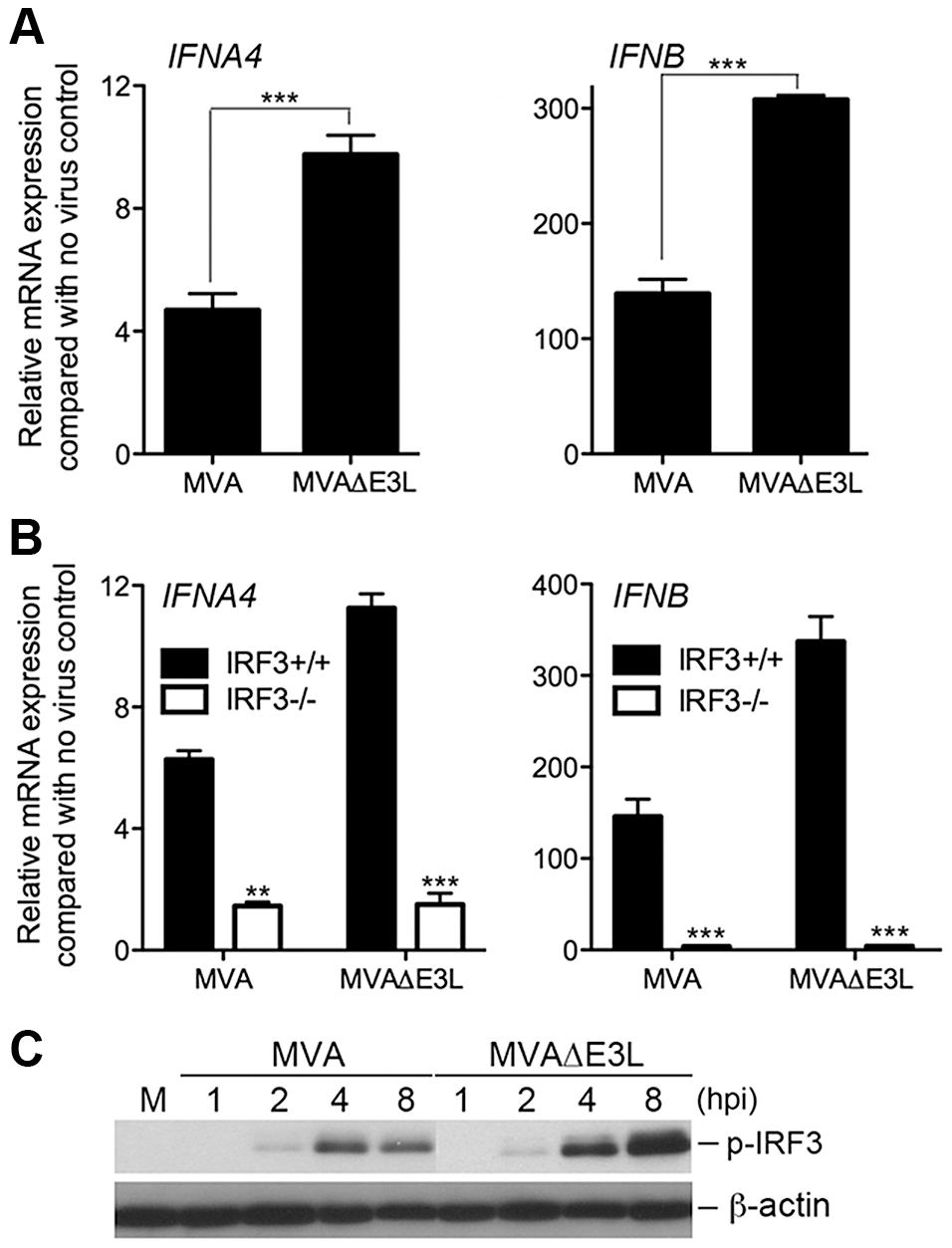 MVAΔE3L induces high levels of type I IFN gene expression in BMDCs than MVA does.
