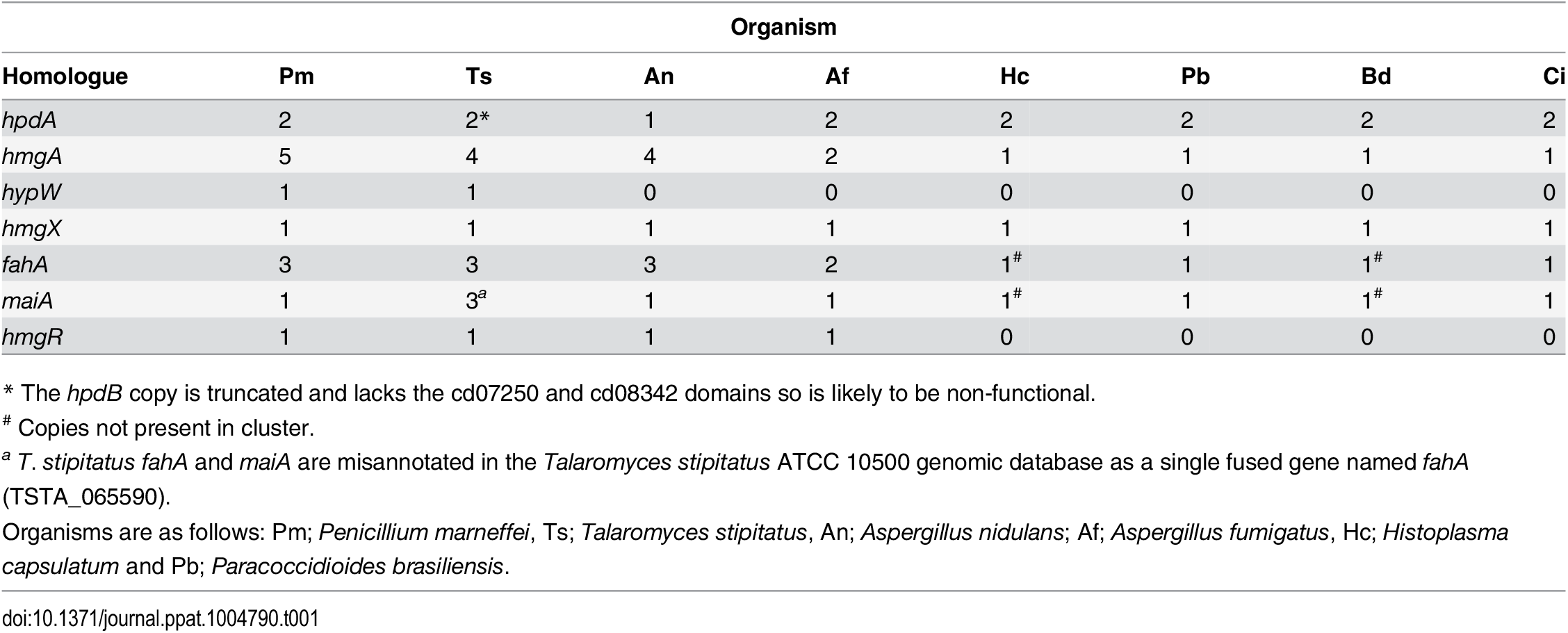 Paralogues of tyrosine catabolic cluster genes.