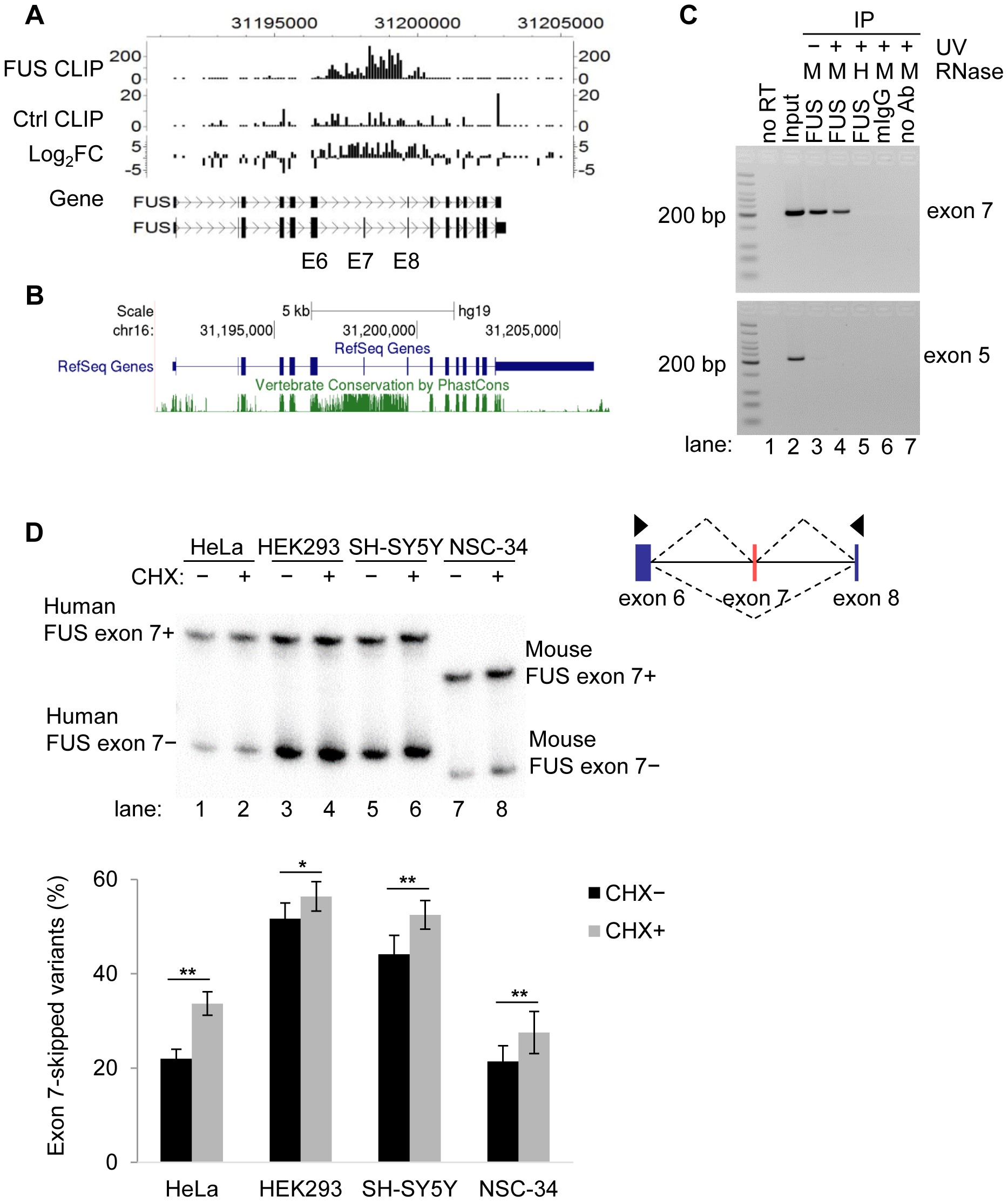 FUS binds to exon 7 and flanking introns of its own pre-mRNA <i>in vivo</i>.