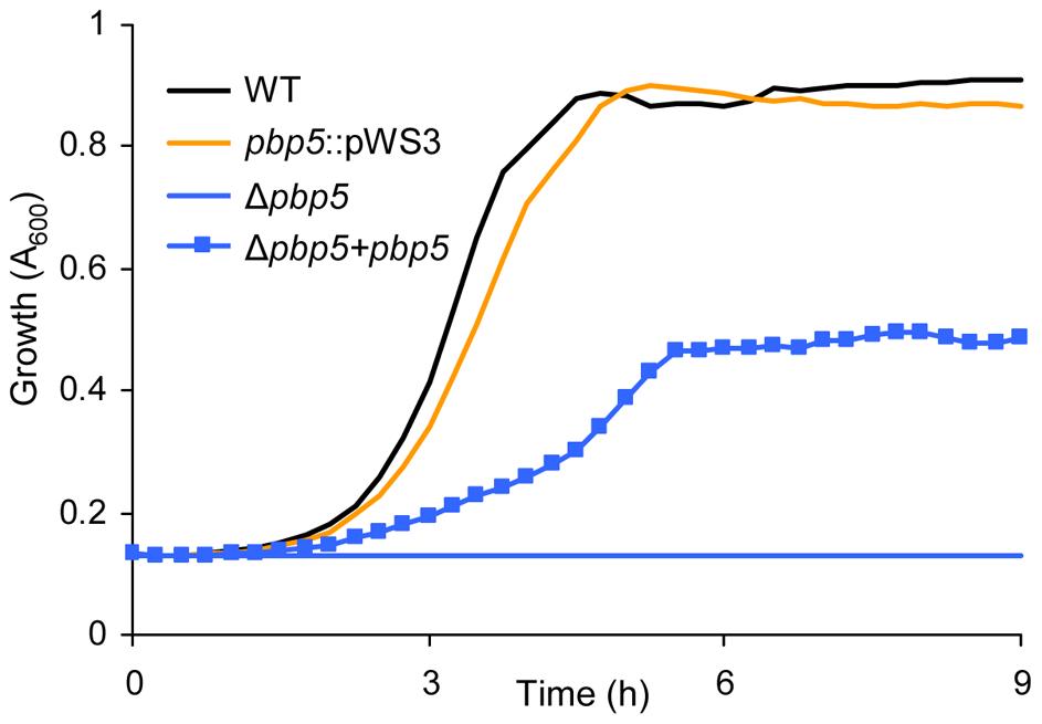 Growth curves of <i>E. faecium</i> E1162 and <i>pbp5</i> mutants in BHI with 20 µg ml<sup>−1</sup> ampicillin.