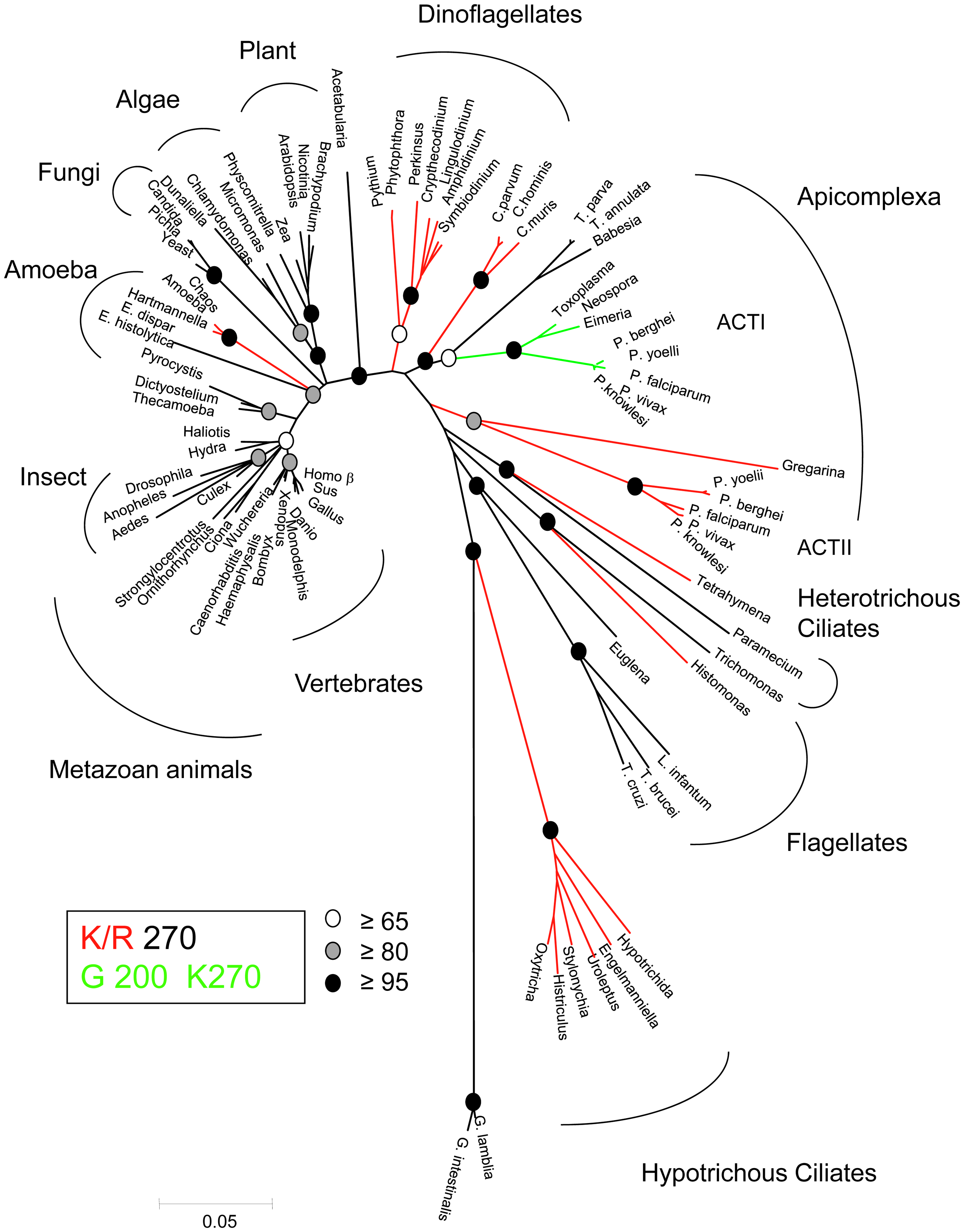Phylogenetic tree highlighting the diversity of actins.