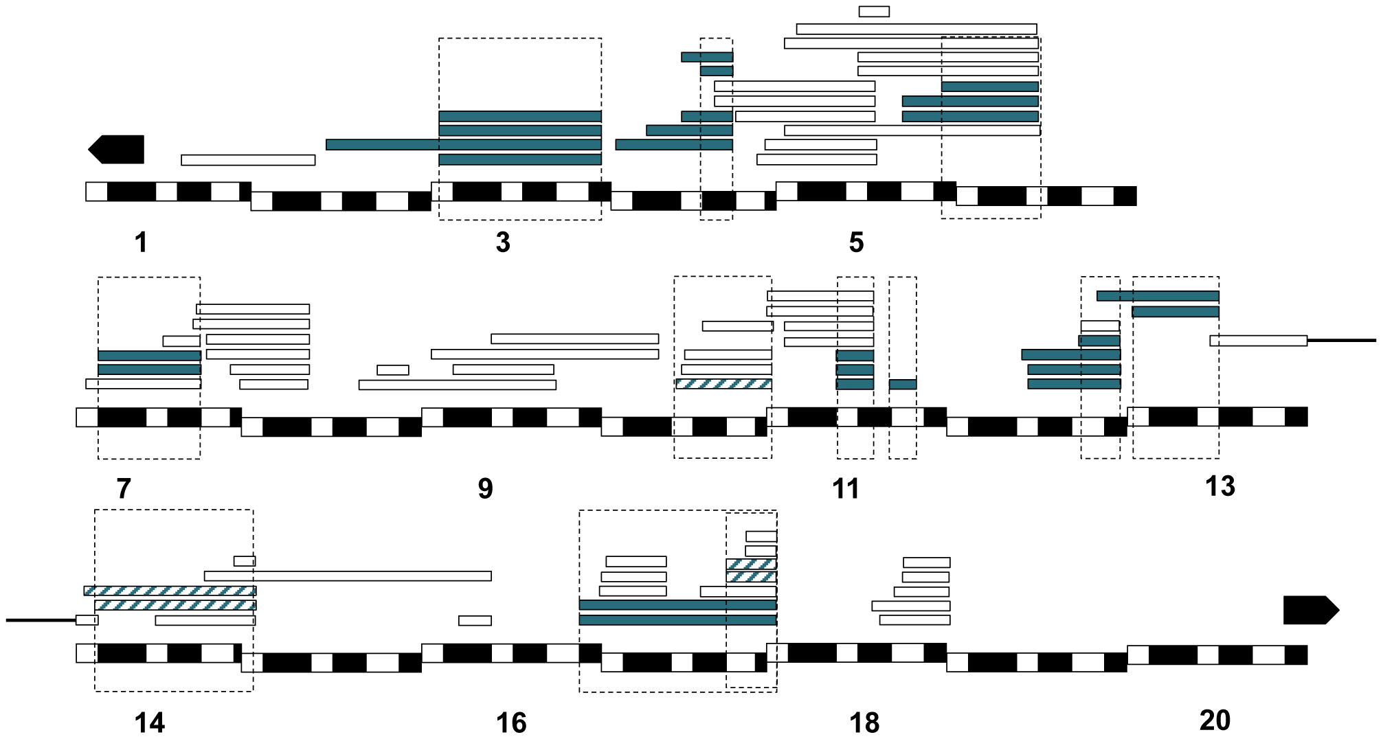 Mapping results from <i>mel/san</i> crosses.