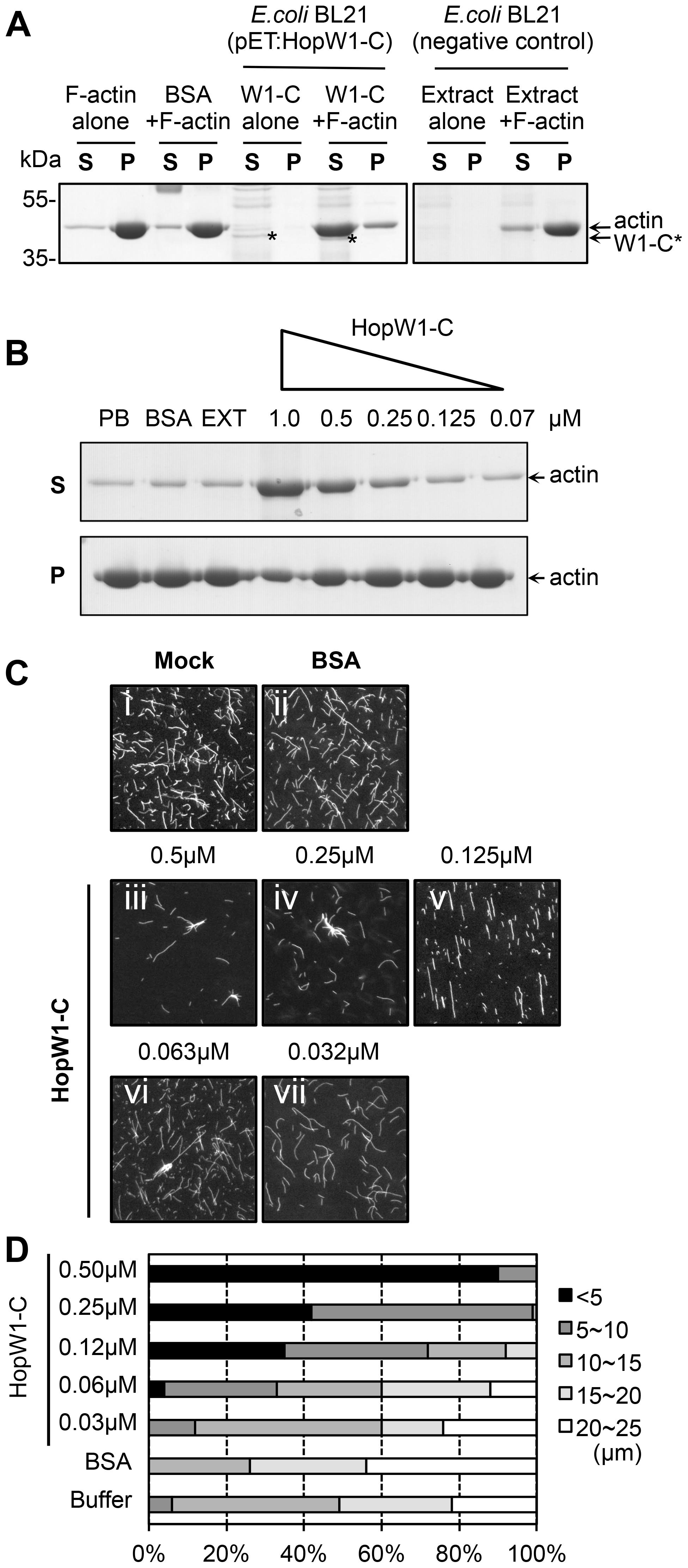 HopW1-C disrupts F-actin <i>in vitro</i>.