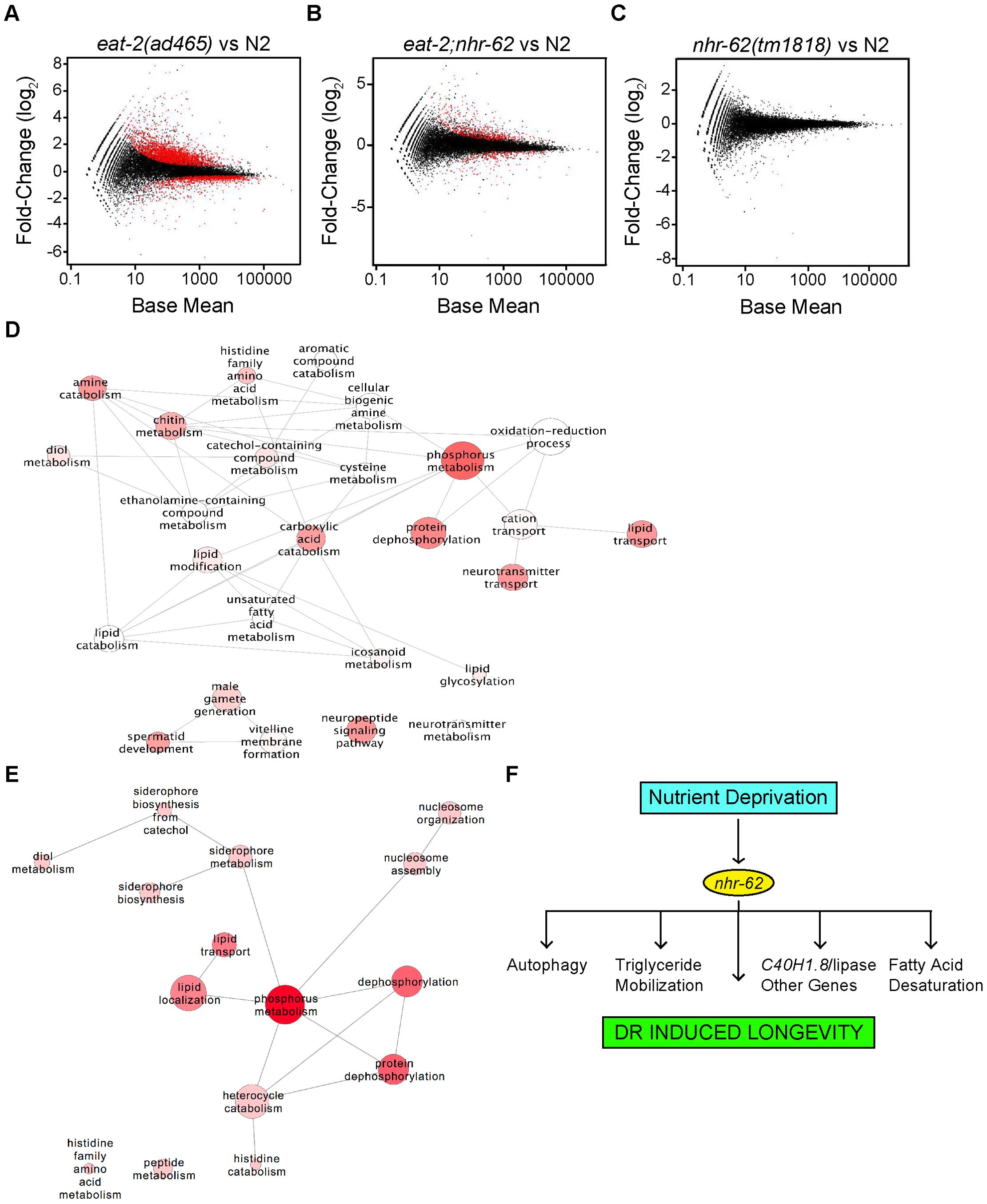 Expression profile analysis of <i>eat-2</i> and <i>nhr-62</i> regulated genes.