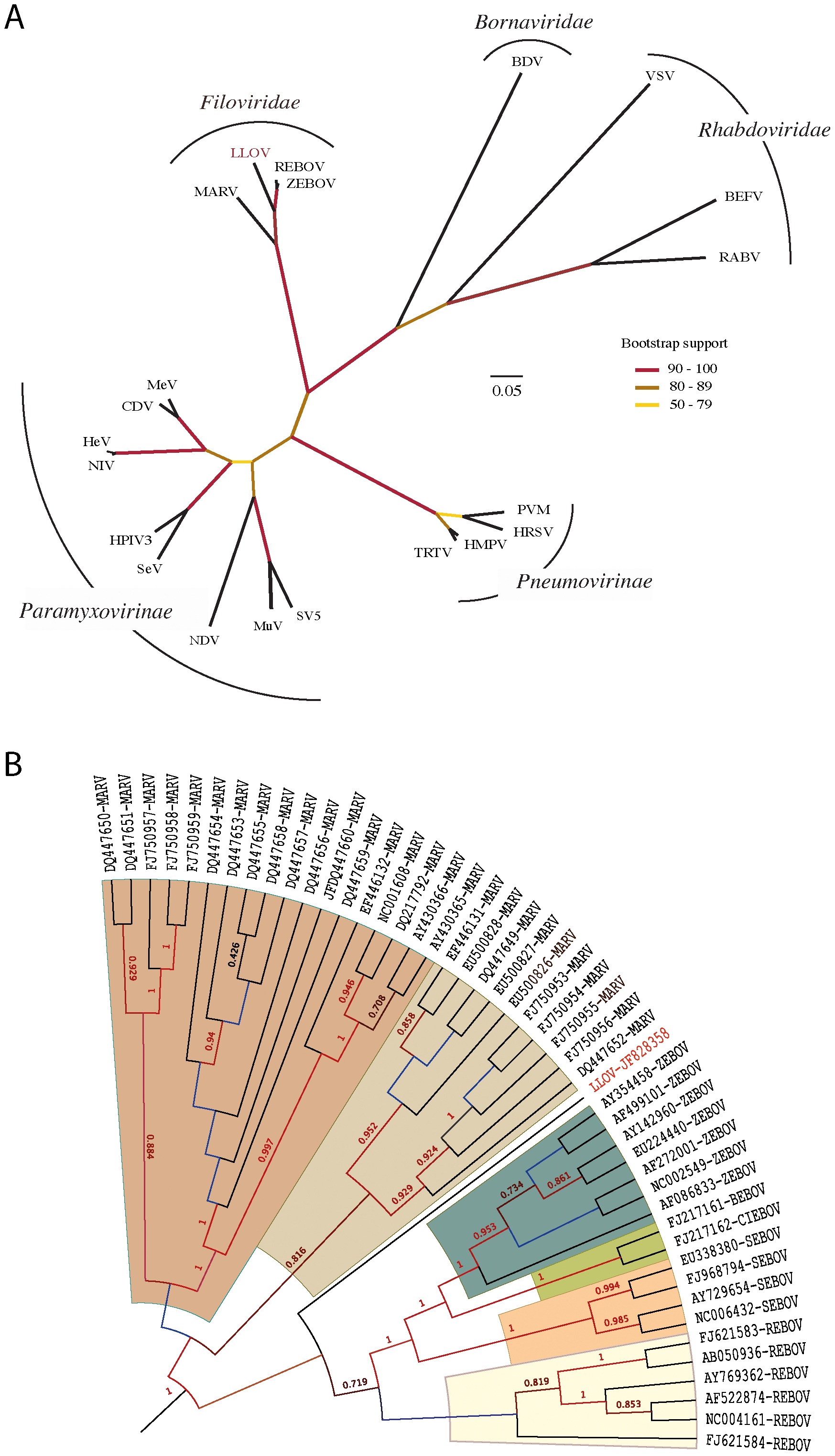 Phylogenetic analysis of LLOV.
