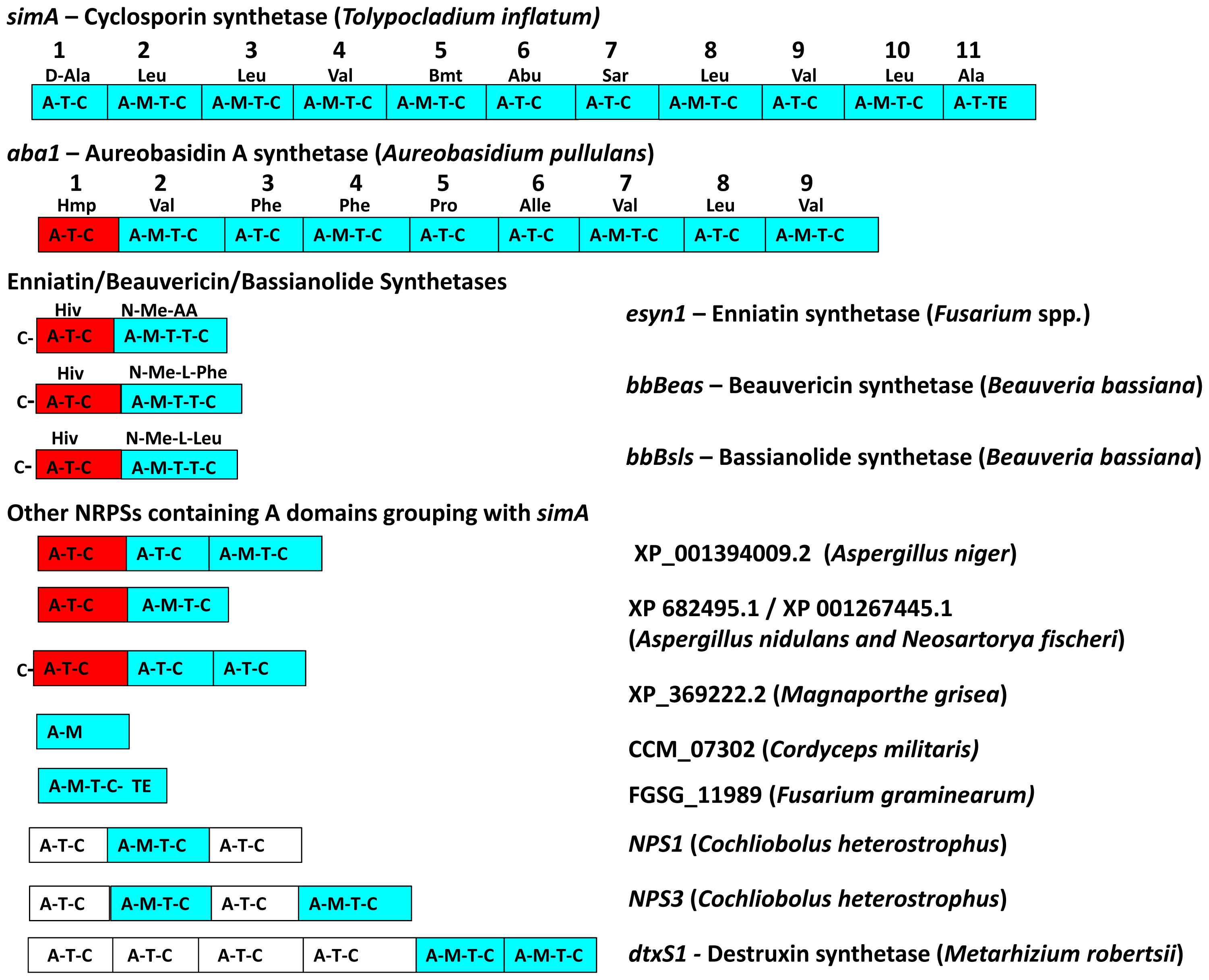 Modular domain structure and A-domain specificities of NRPSs grouping within the <i>simA</i> clade.