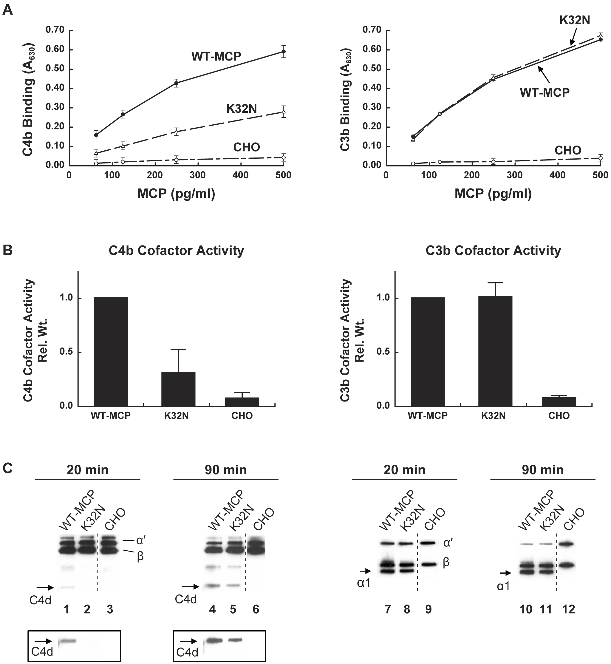 C3b and C4b binding and cofactor activity of K32N compared to wild type MCP.