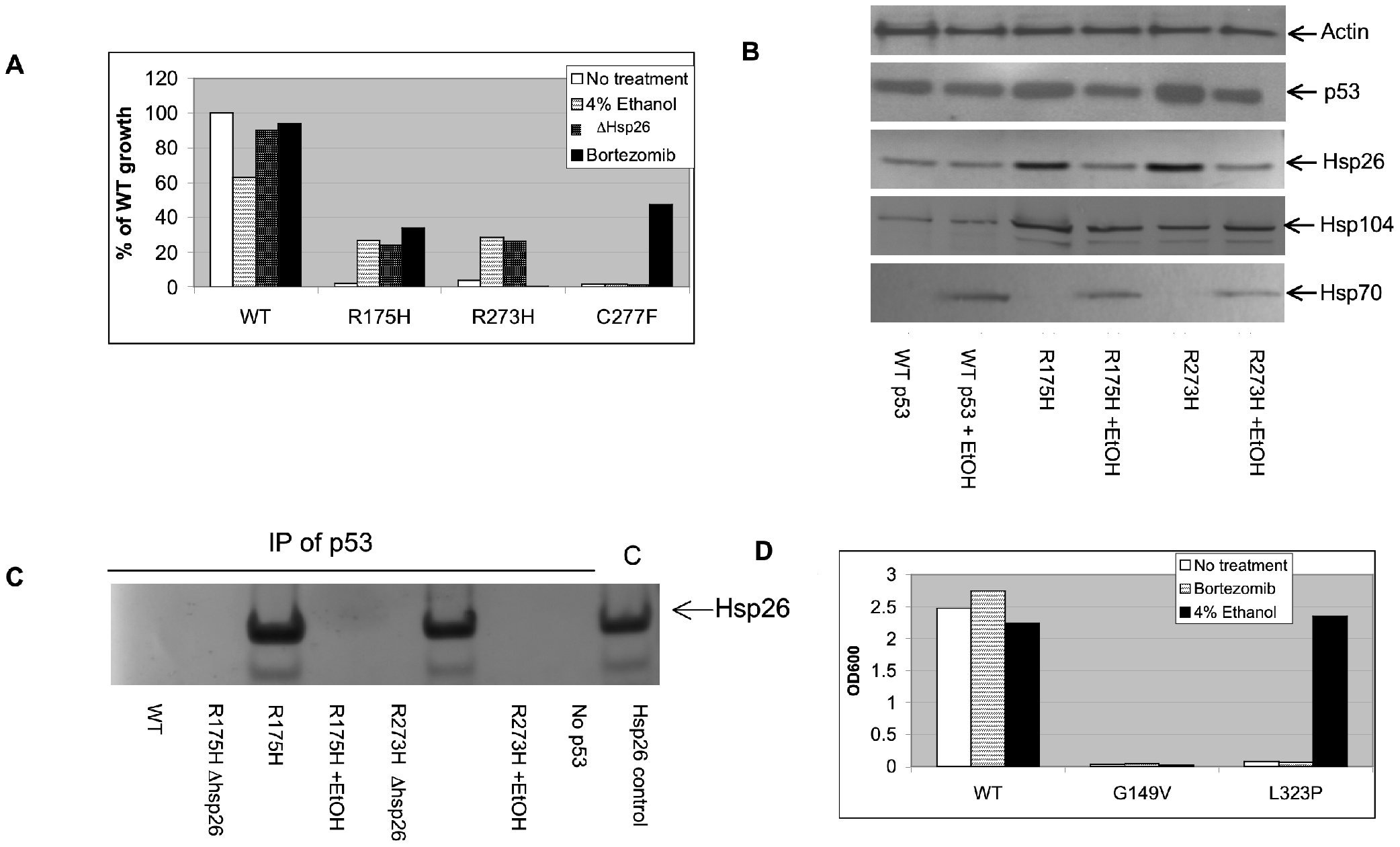 Functional rescue of mutant p53 and MTHFR in yeast.