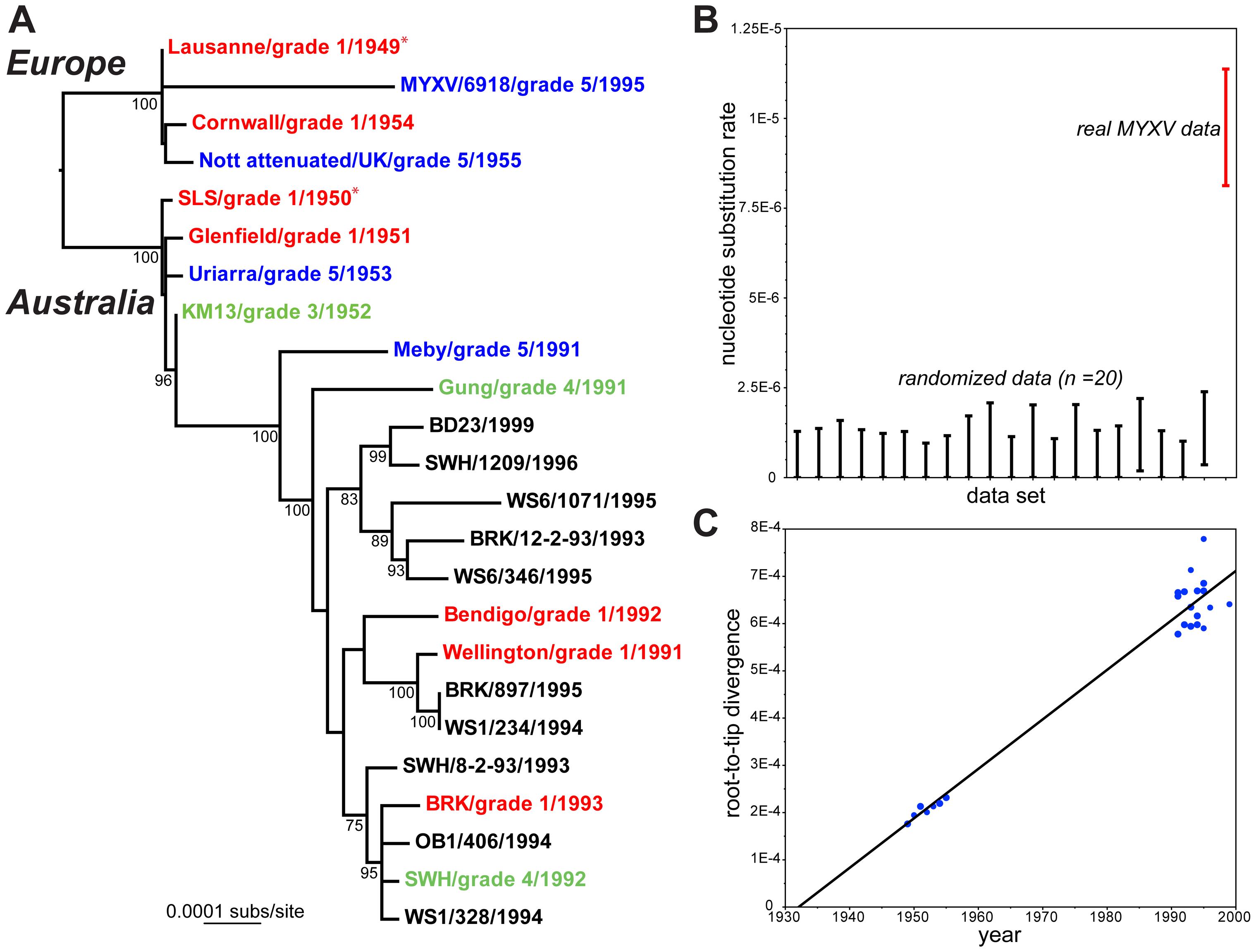 Evolutionary history of MYXV.