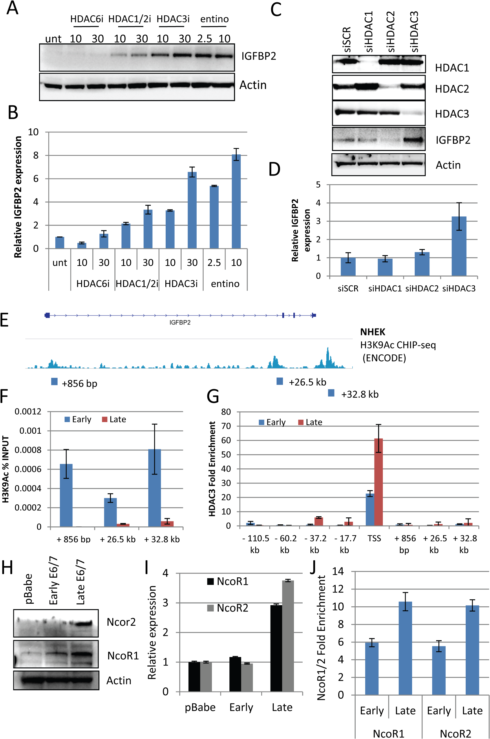 HDAC3 is a critical regulator of IGFBP2 expression.