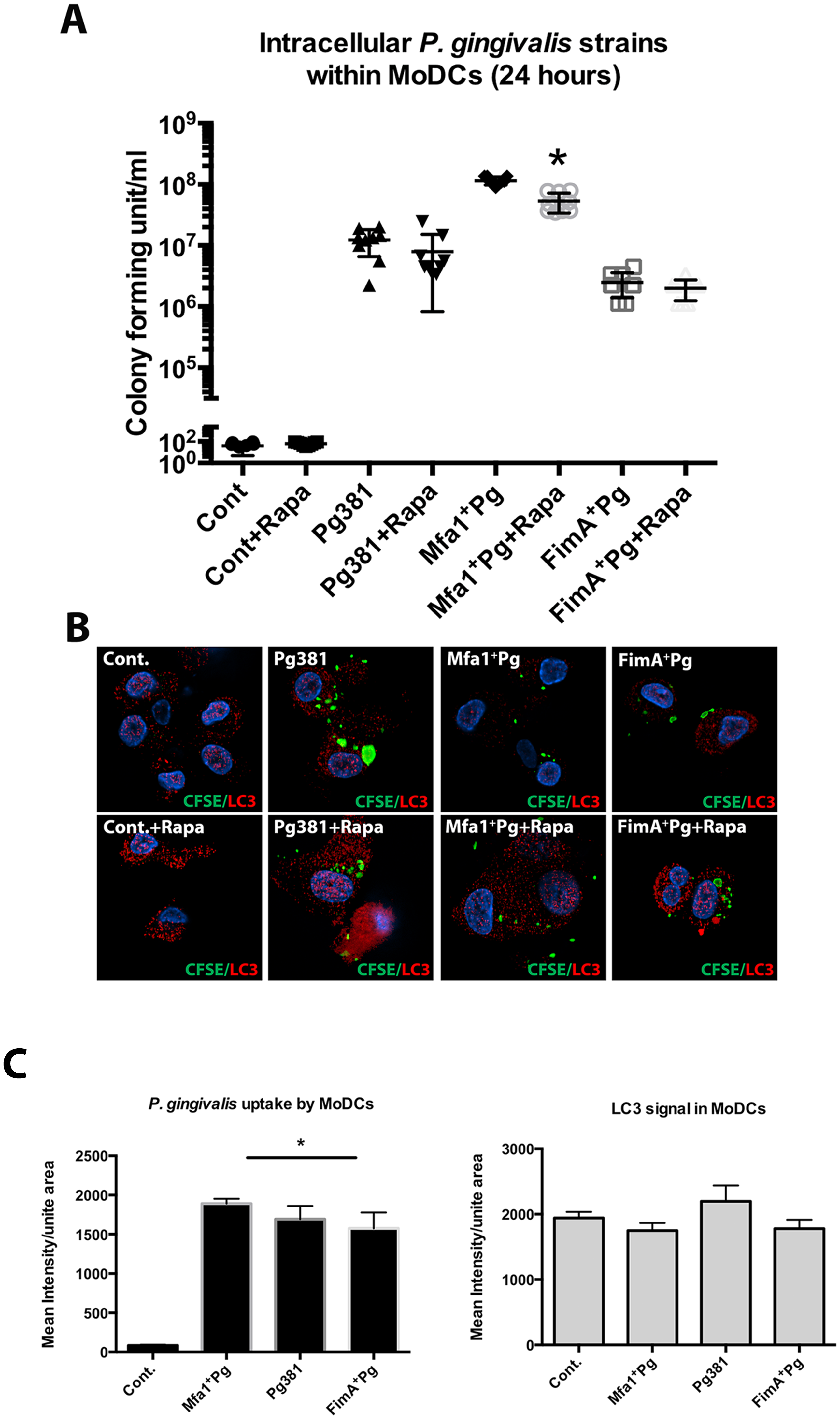 Lower intracellular content of Mfa1<sup>+</sup>Pg in MoDCs treated with Rapamycin.