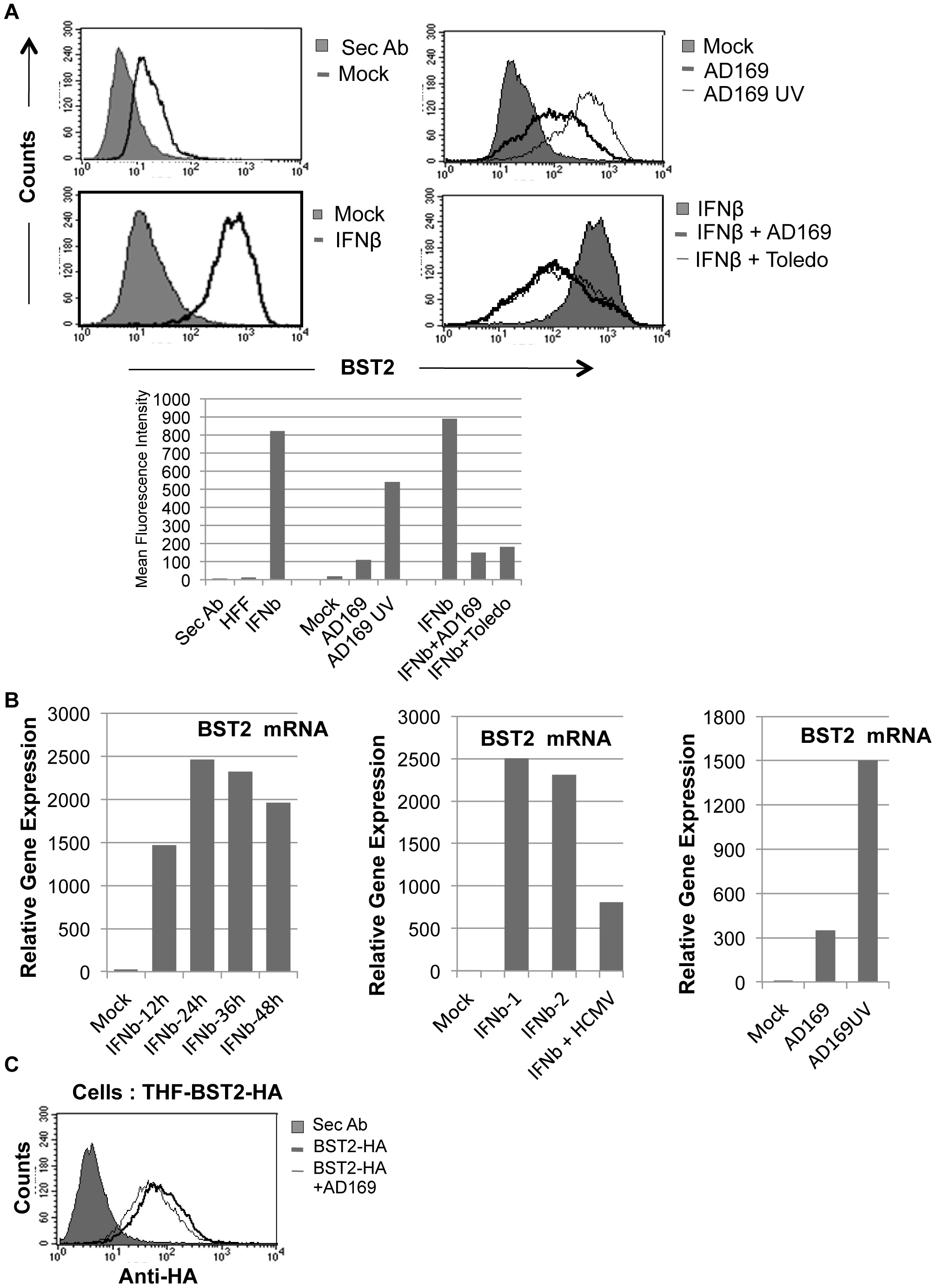 HCMV induces BST2 independent of IFN, but inhibits IFN-dependent induction.
