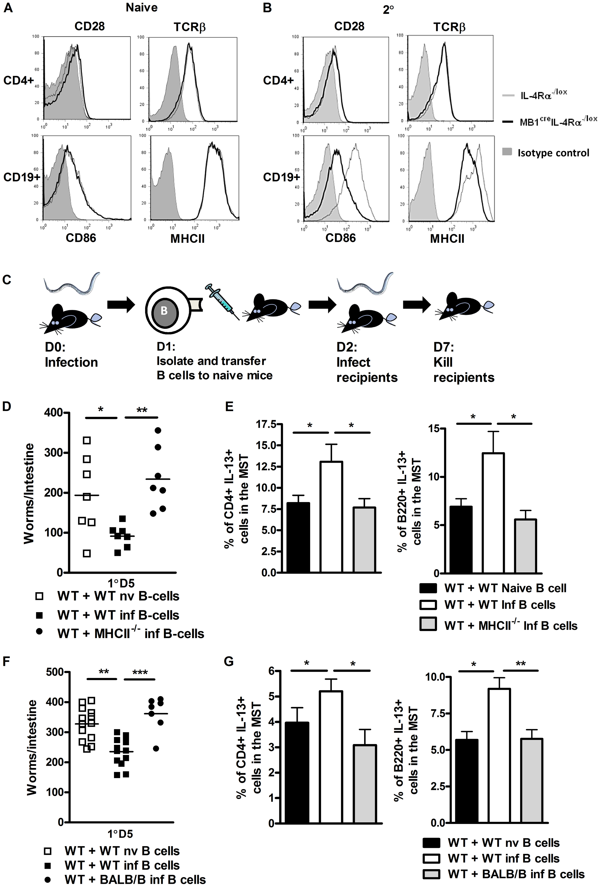 B cell MHCII antigen presentation mediates optimal immunity to <i>N. brasiliensis</i>.