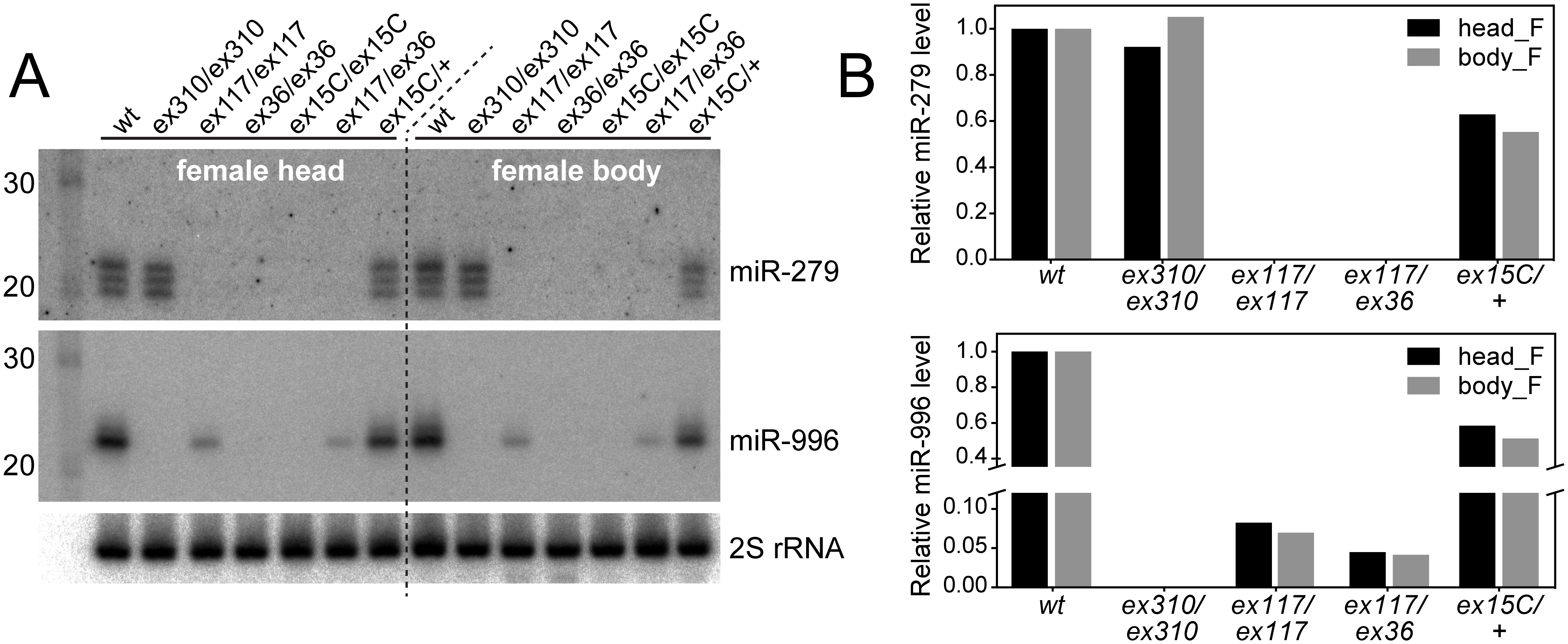 Severe loss of mature miR-996 expression in <i>mir-279</i> deletion alleles.