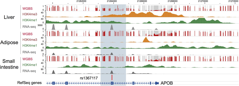 Bioinformatic annotation for the <i>APOB</i> locus.