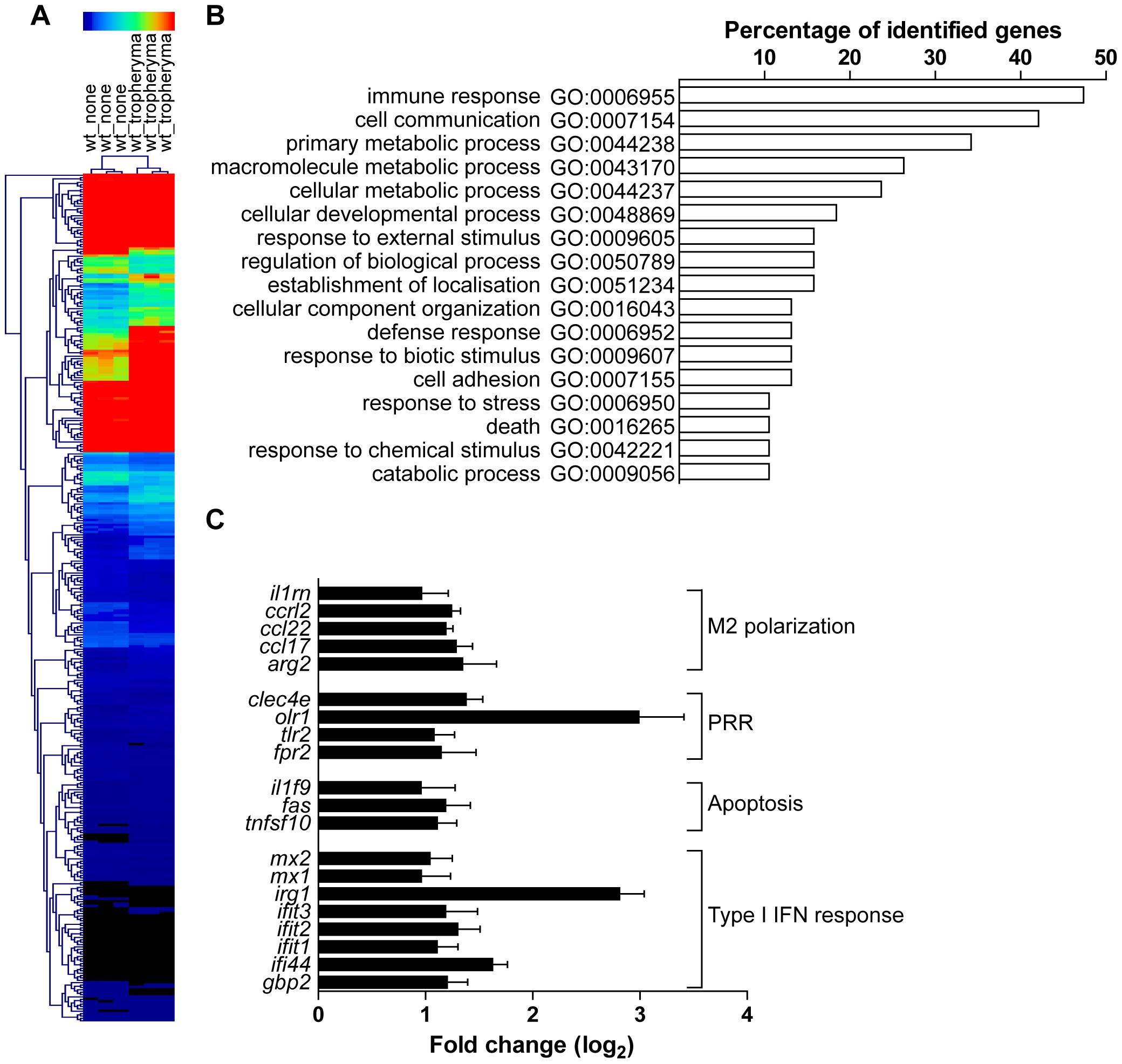 Transcriptional program induced <i>T. whipplei</i> in BMDM.