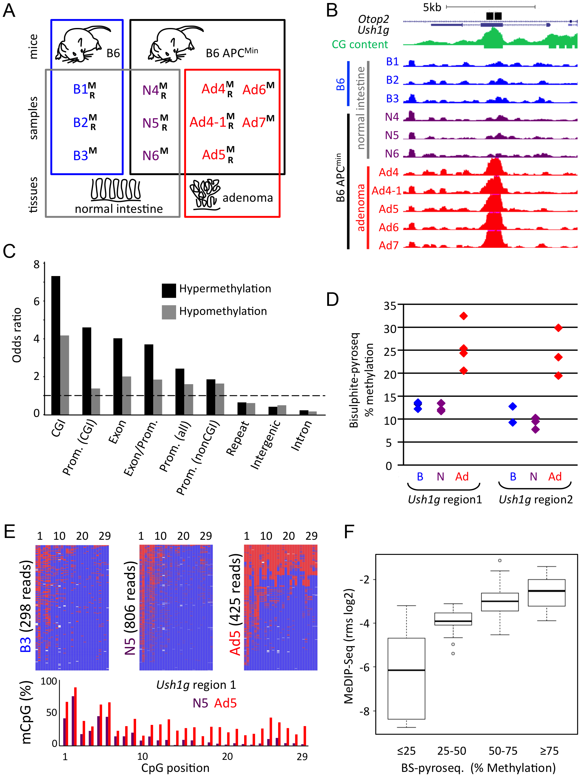 Generation and validation of genome-wide CpG methylation maps of APC<sup>Min</sup> mouse normal and adenoma tissues.