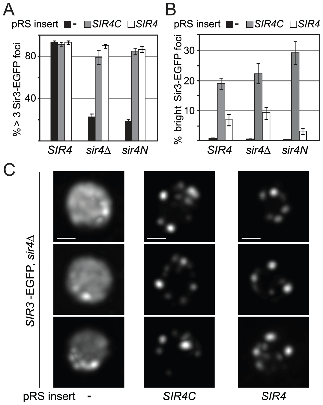 Sir4C supports Sir3 focus formation <i>in vivo</i>.