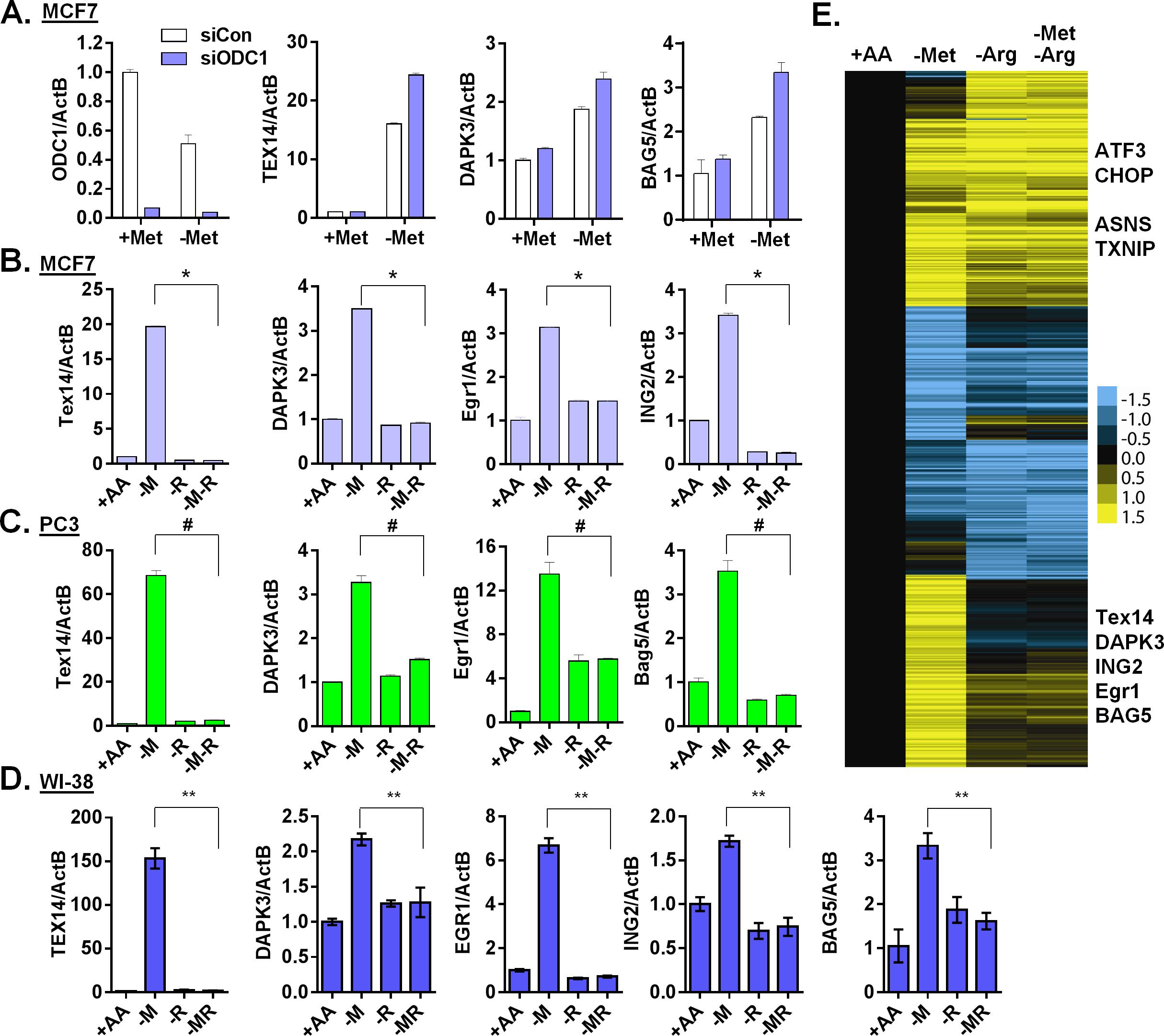 Arginine is required for the methionine-specific transcriptional response.