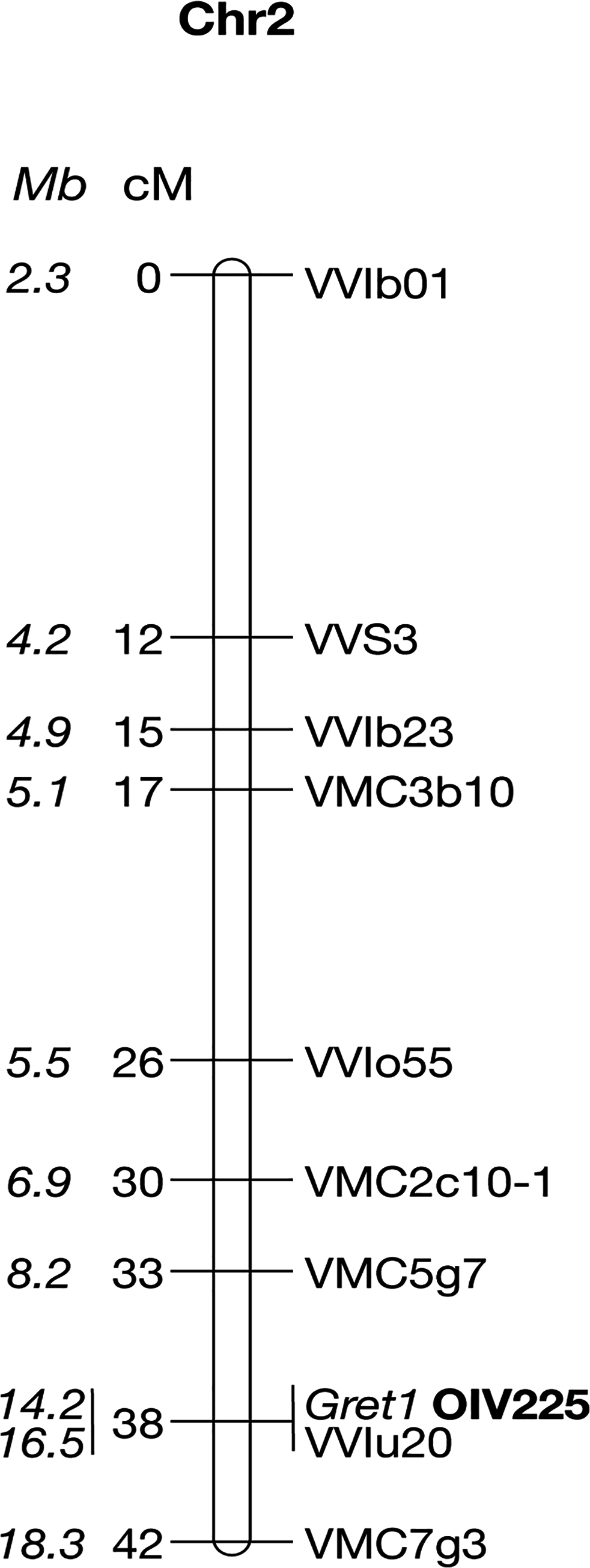 Genetic linkage map of the Pinot noir 162 chromosome 2.