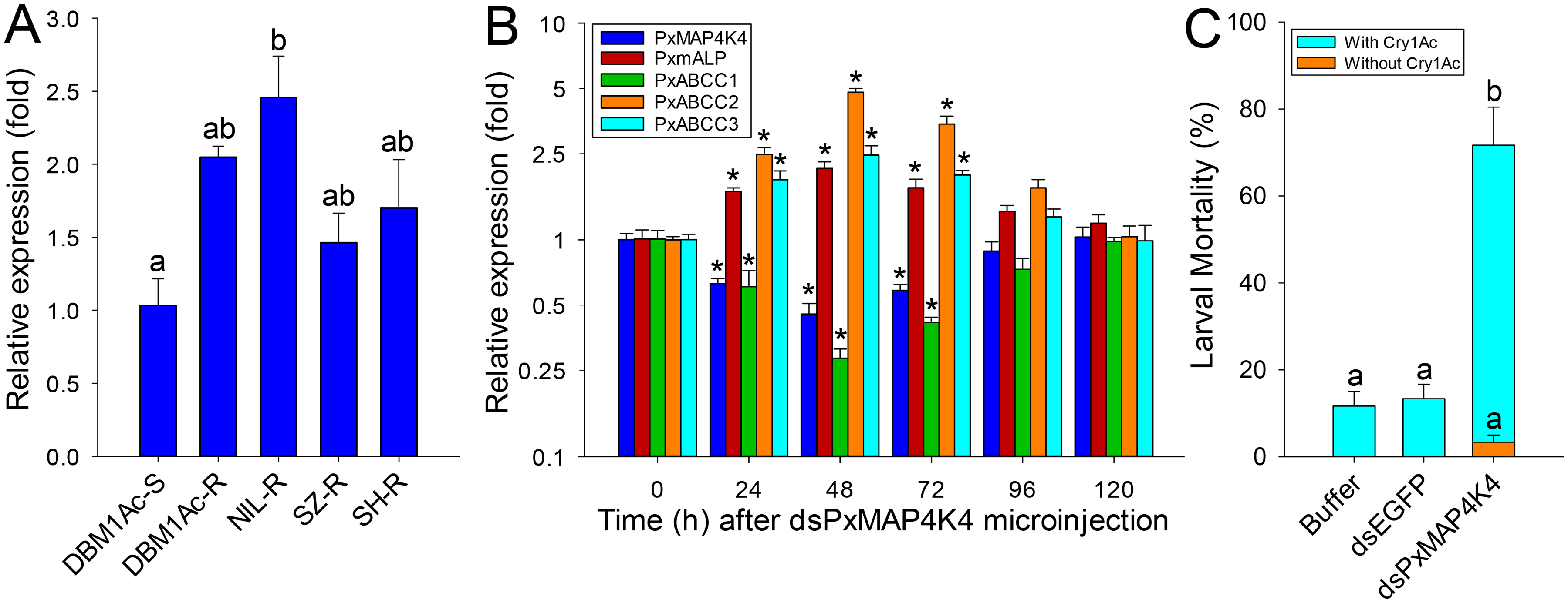 Detection of <i>PxMAP4K4</i> gene expression and effect of its silencing on expression of <i>PxmALP</i> and PxABCC genes and susceptibility to Cry1Ac.