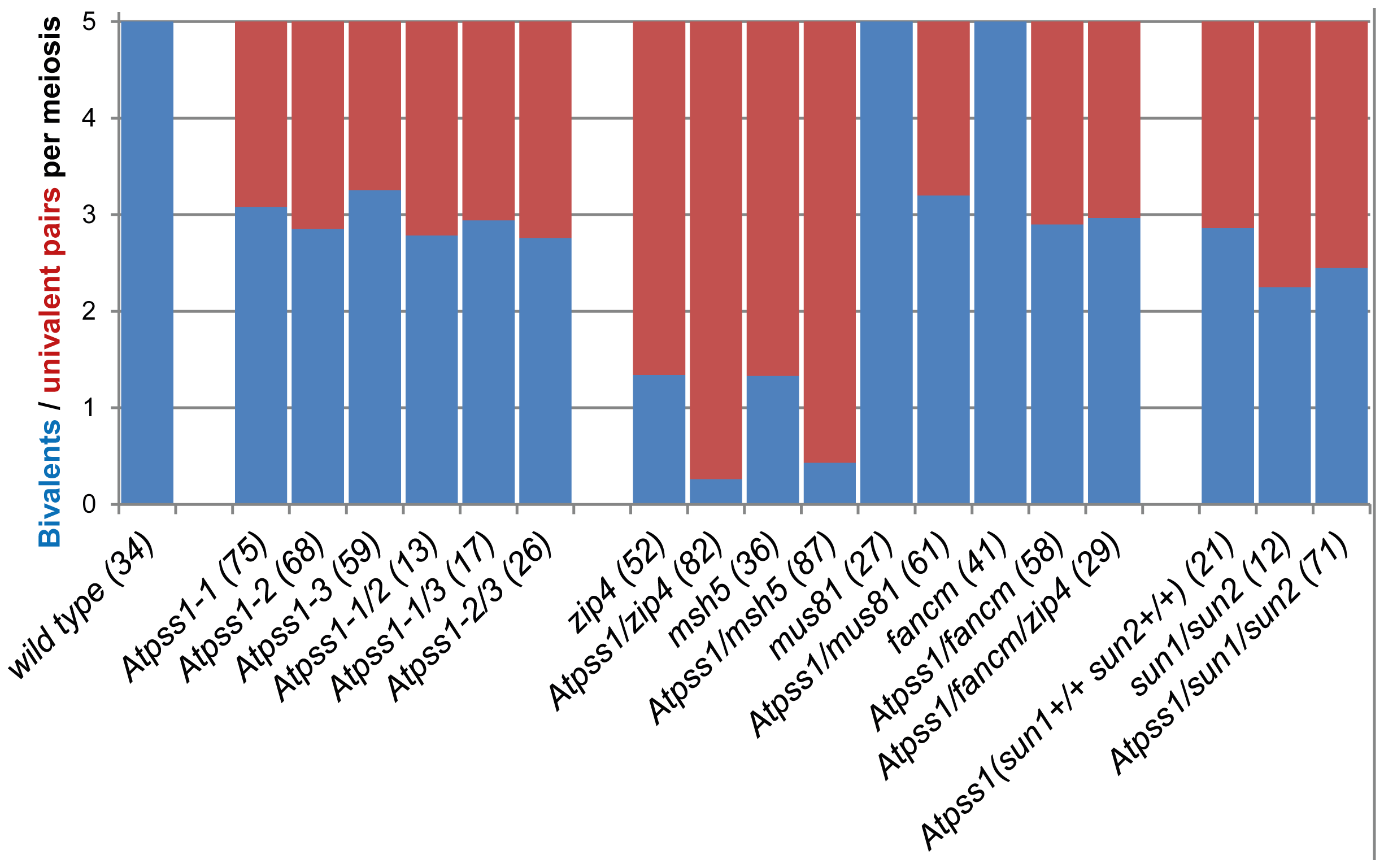 Average number of bivalents (blue) and pairs of univalents (red) per male meiocyte.