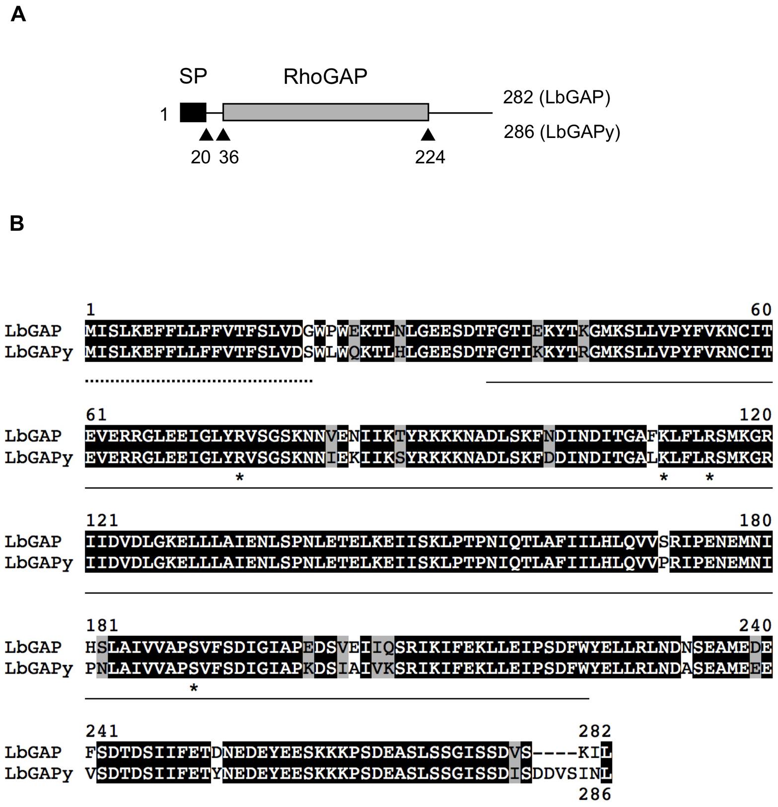 Sequence analysis of LbGAPy, the LbGAP homolog from the ISy <i>L. boulardi</i> line.