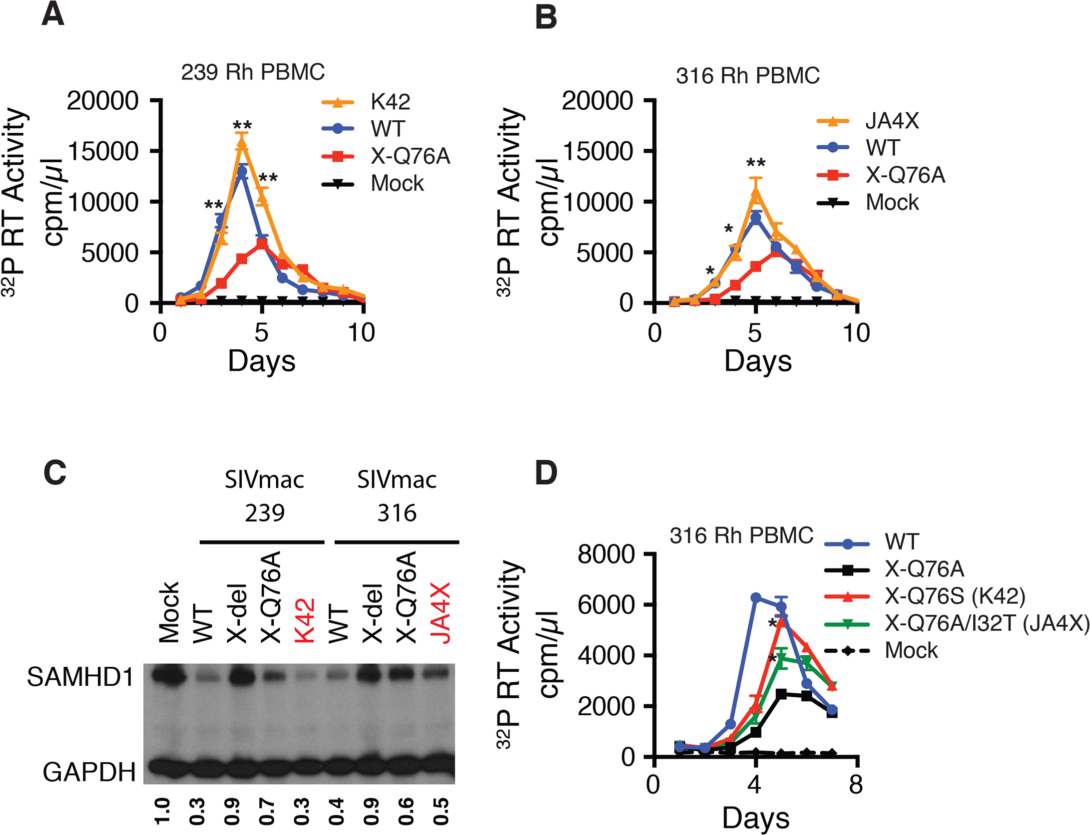 Analyses of Vpx revertant viruses emerging in macaques K42 and JA4X.