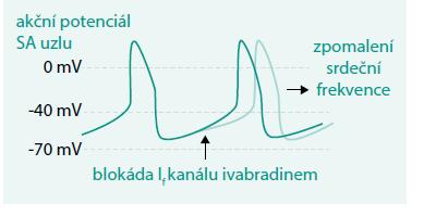 Schéma. Mechanizmus účinku ivabradinu