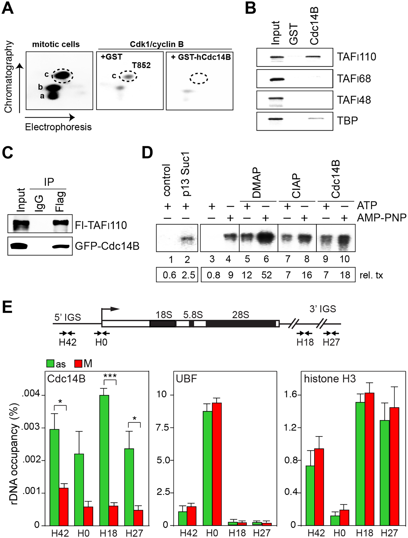 Cdc14B relieves transcriptional repression by dephosphorylating TAF<sub>I</sub>110 at threonine 852.