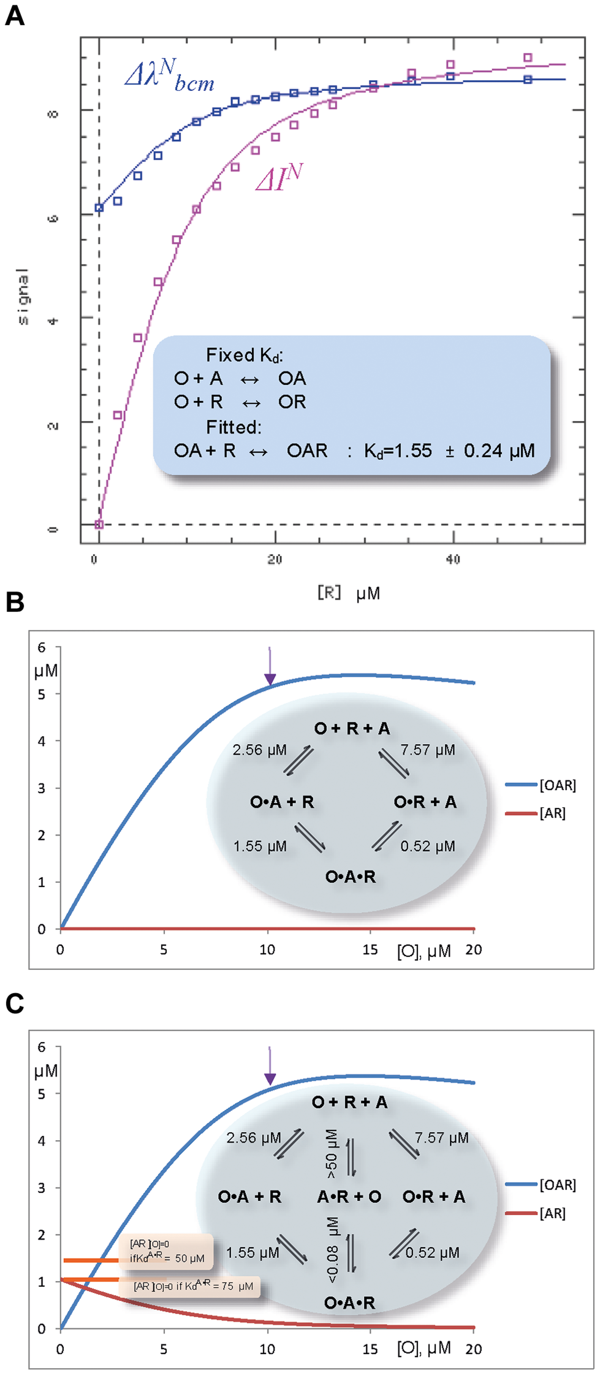 Fluorescent studies and simulations of the ternary complex formation between ORF57, O, fragment of viral RNA, R, and ALYREF, A.