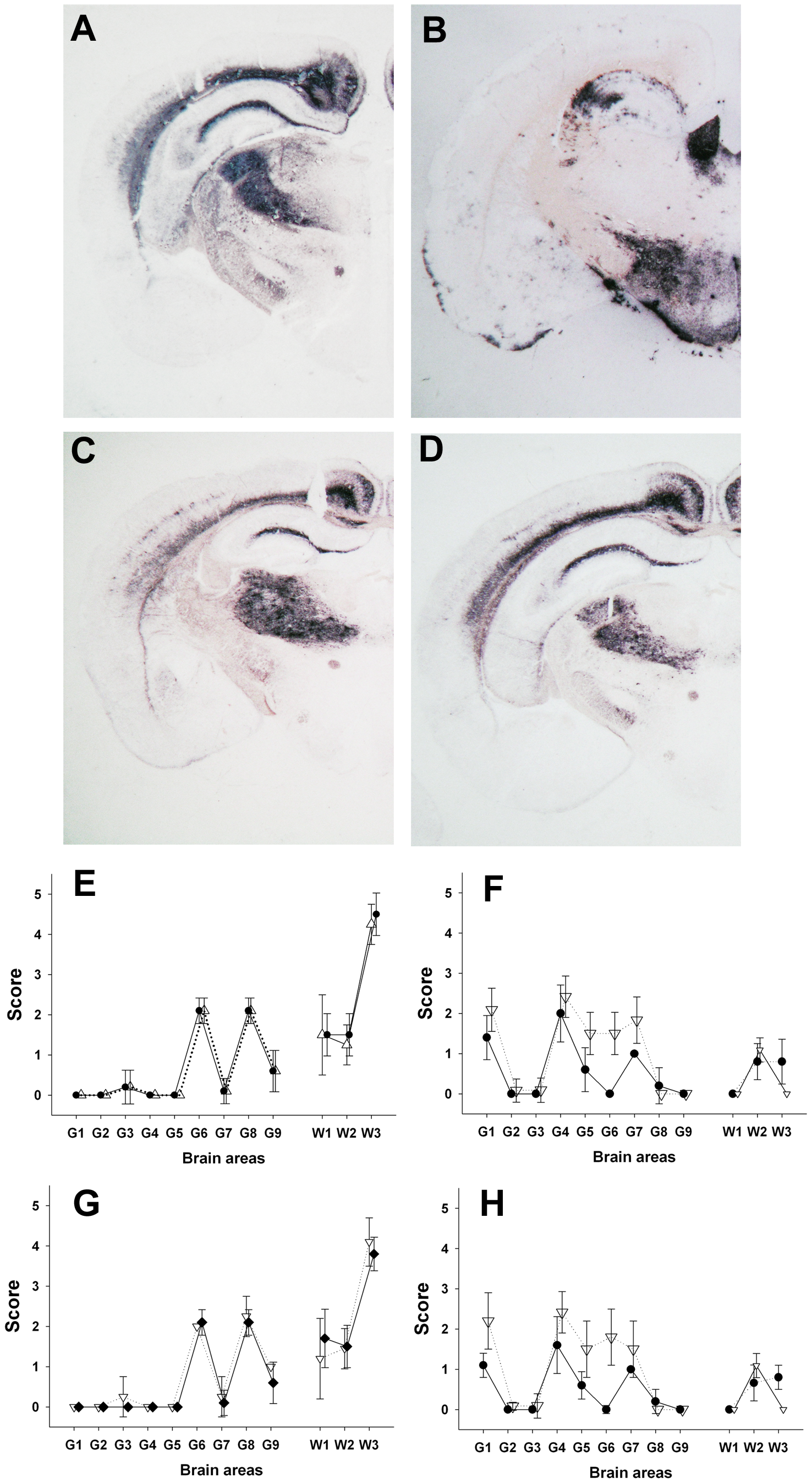 PrP<sup>Sc</sup> distribution pattern and lesion profile in <i>tg338</i> mice inoculated with Atypical/Nor98 scrapie and classical scrapie sheep tissues.