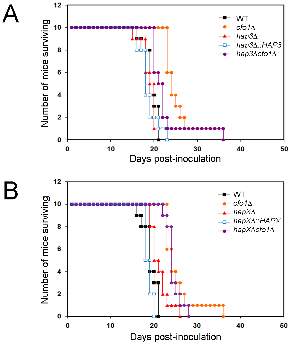 The <i>hapXΔ</i> mutant is modestly attenuated for virulence in a mouse inhalation model of cryptococcosis.