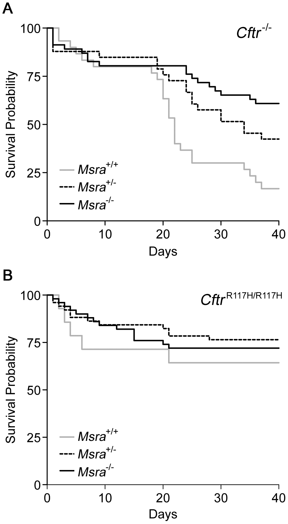 Kaplan-Meier survival curves in CF mice according to <i>Msra</i> genotype.