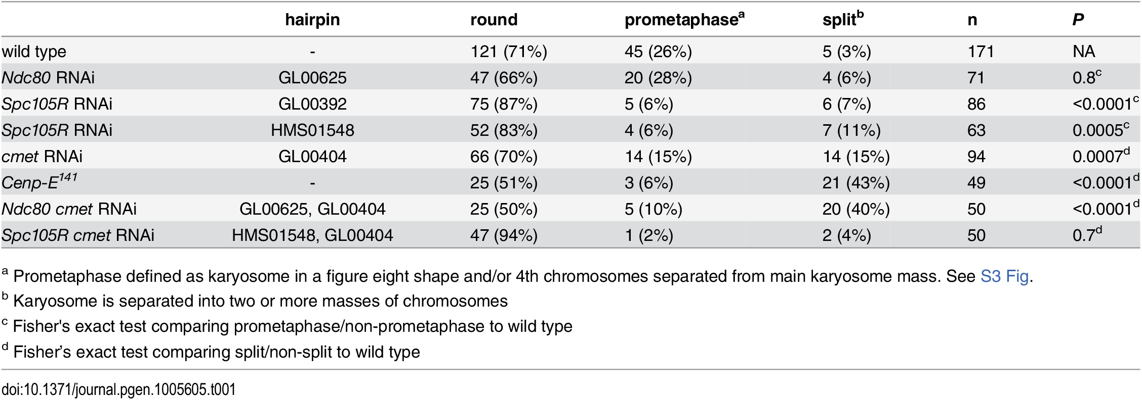 Prometaphase karyosome configurations in the absence of kinetochore components.