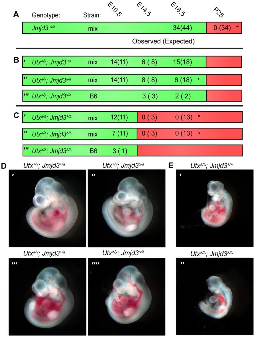 <i>Utx</i> and <i>Jmjd3</i> mutant phenotypes.