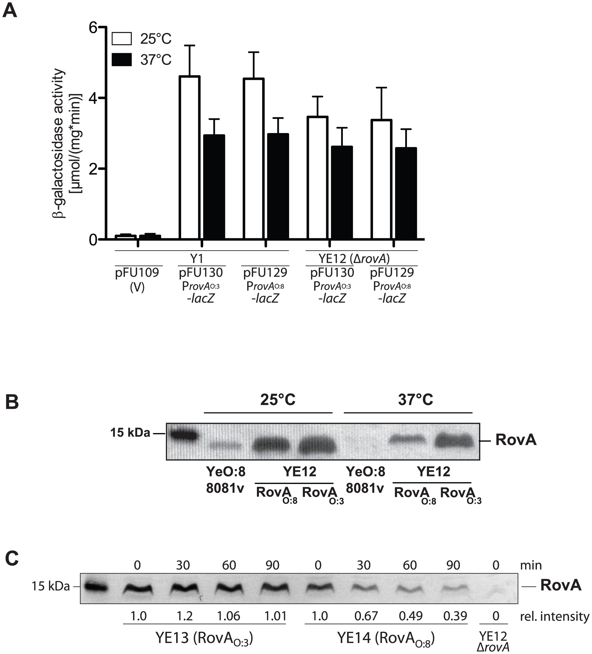 Analysis of RovA production and stability in <i>Y. enterocolitica</i> O:3.