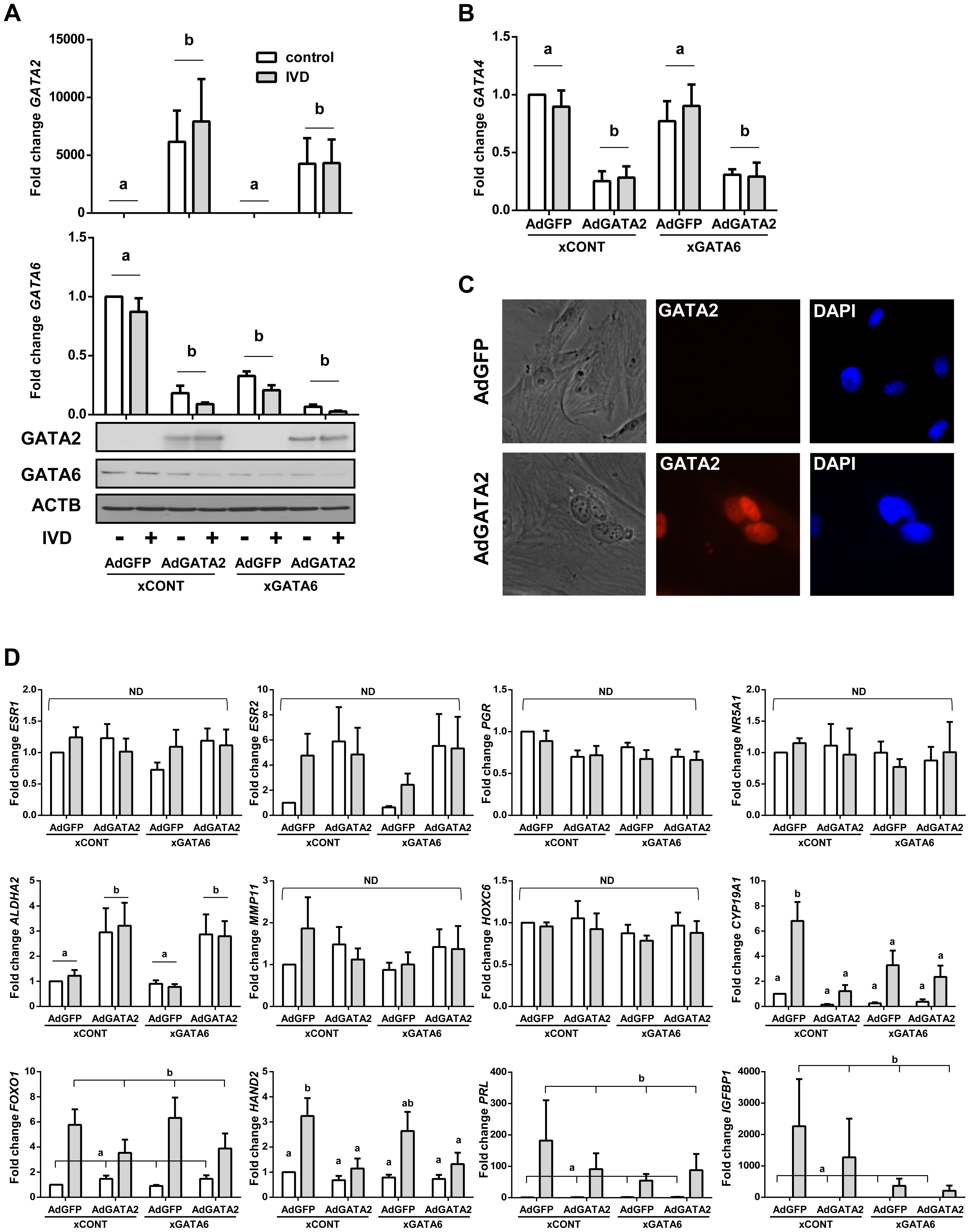 The effect of silencing <i>GATA6</i> and expressing GATA2 in OSIS.