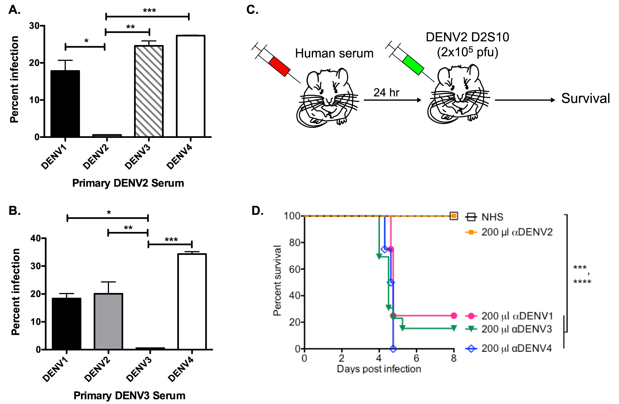 Primary DENV-immune human sera enhance heterotypic but not homotypic serotypes at high serum concentrations <i>in vitro</i> and <i>in vivo</i>.