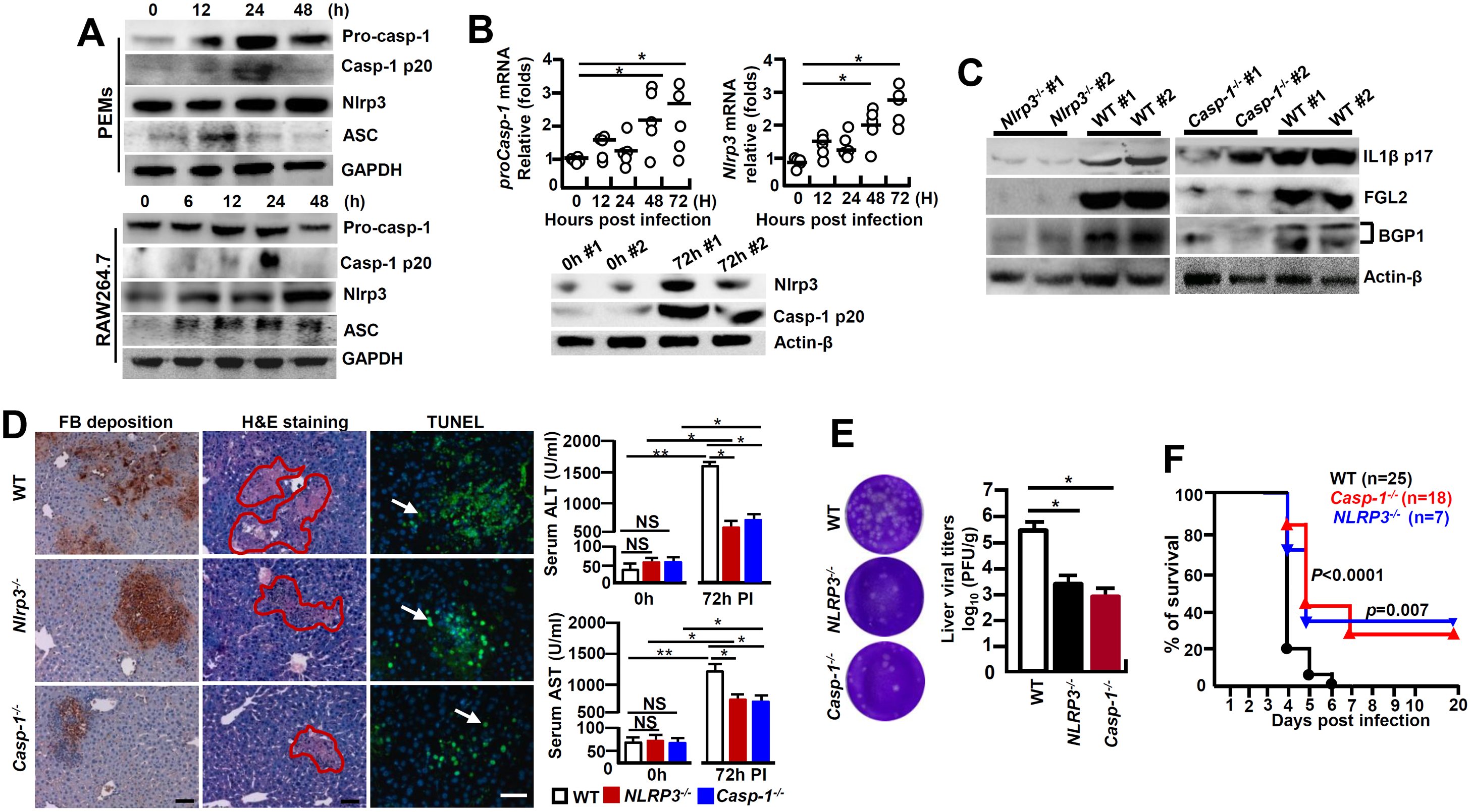 NLRP3 inflammasome involves in regulating the pathogenesis of MHV-3-mediated hepatitis.