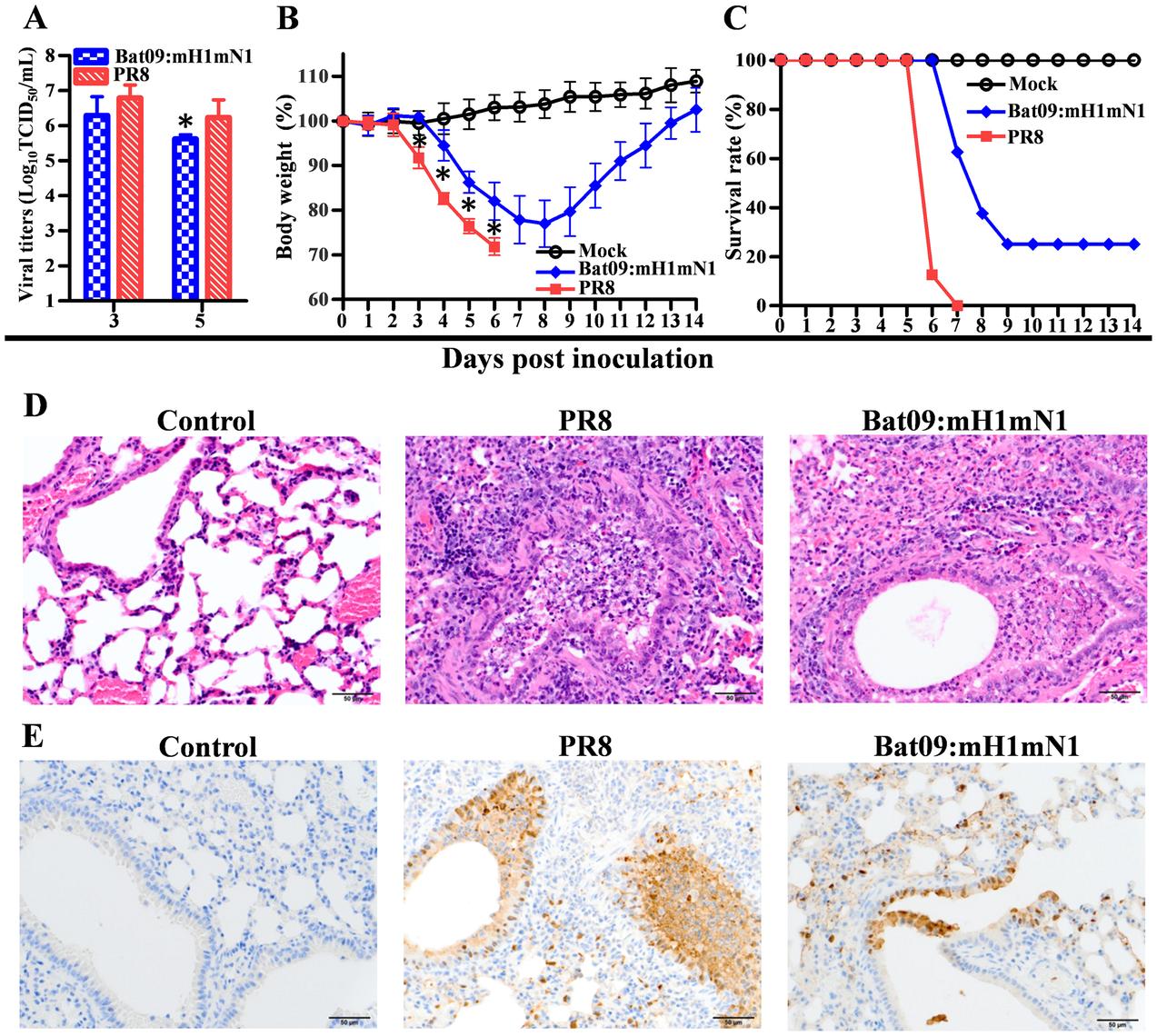 Pathogenicity of Bat09:mH1mN1 and PR8 viruses in mice.