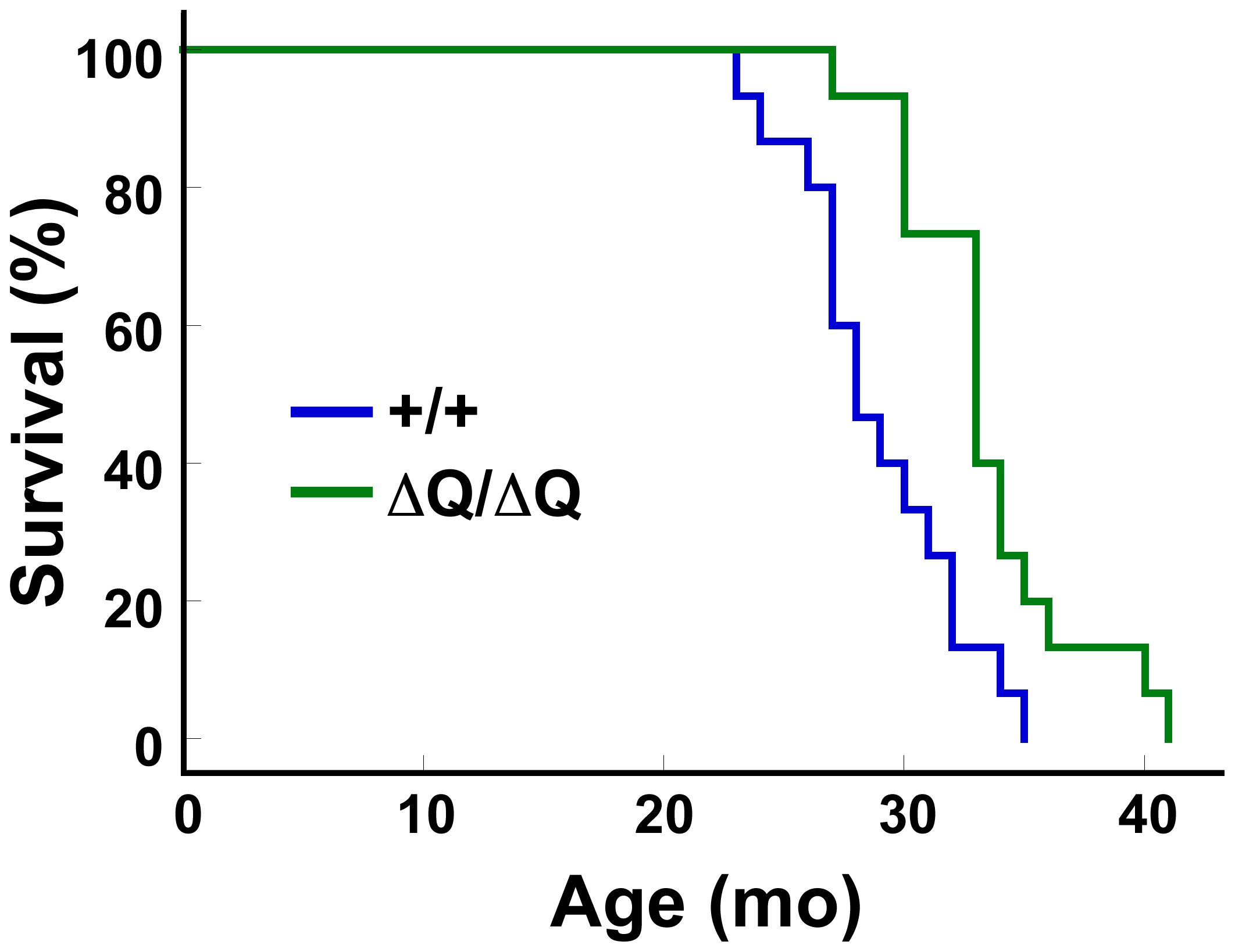 <i>Hdh<sup>ΔQ/ΔQ</sup></i> mice live significantly longer than wild-type mice.