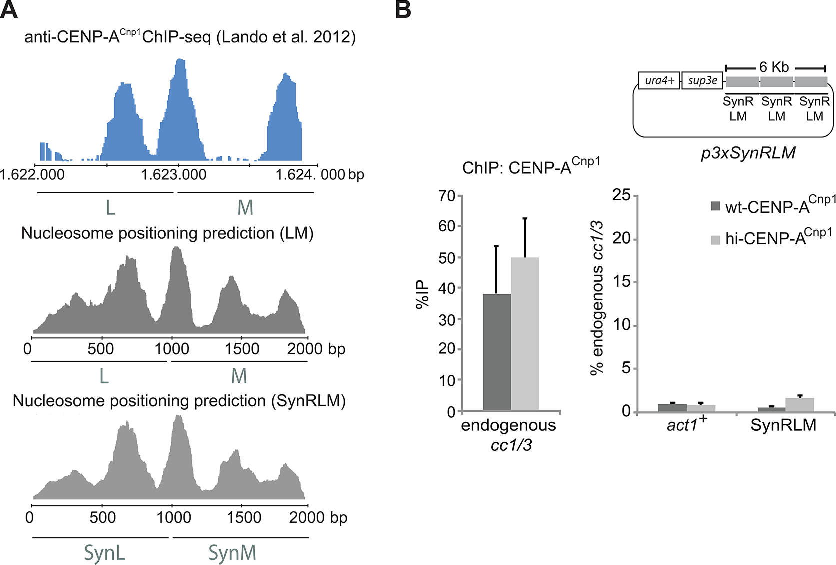Genetic information contained within DNA sequence is required for centromeric chromatin establishment.