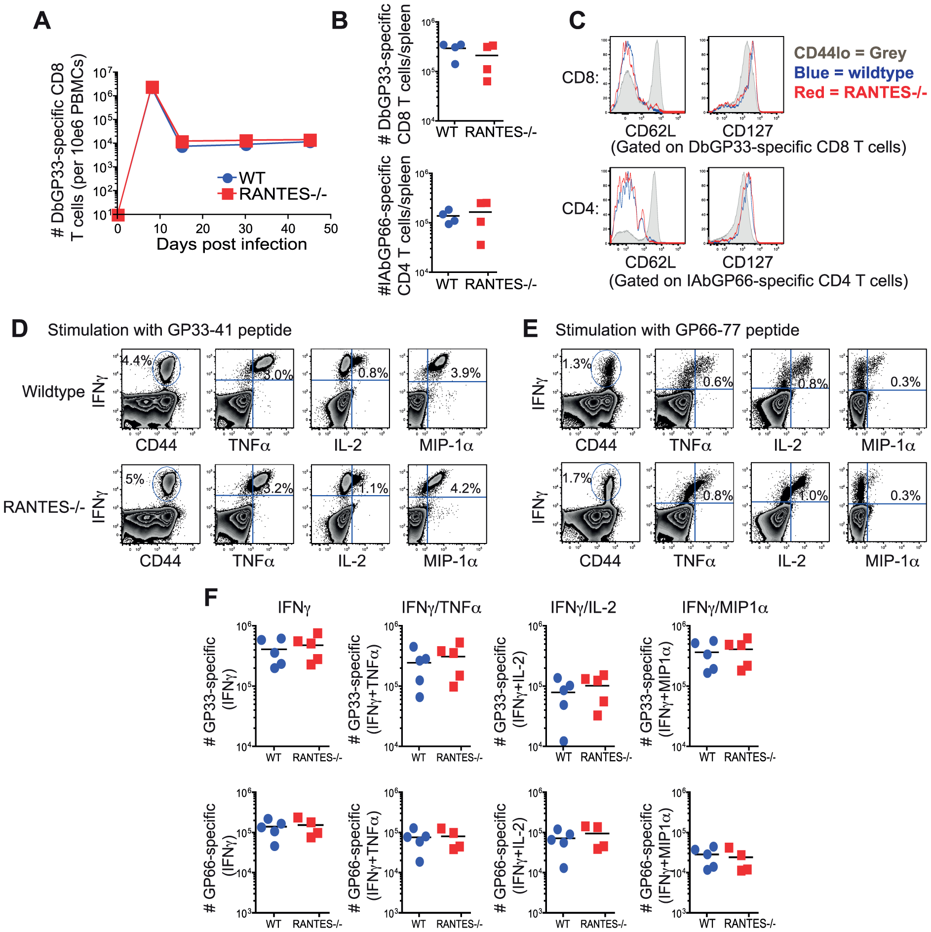 The absence of RANTES does not affect T cell responses to acute LCMV infection.