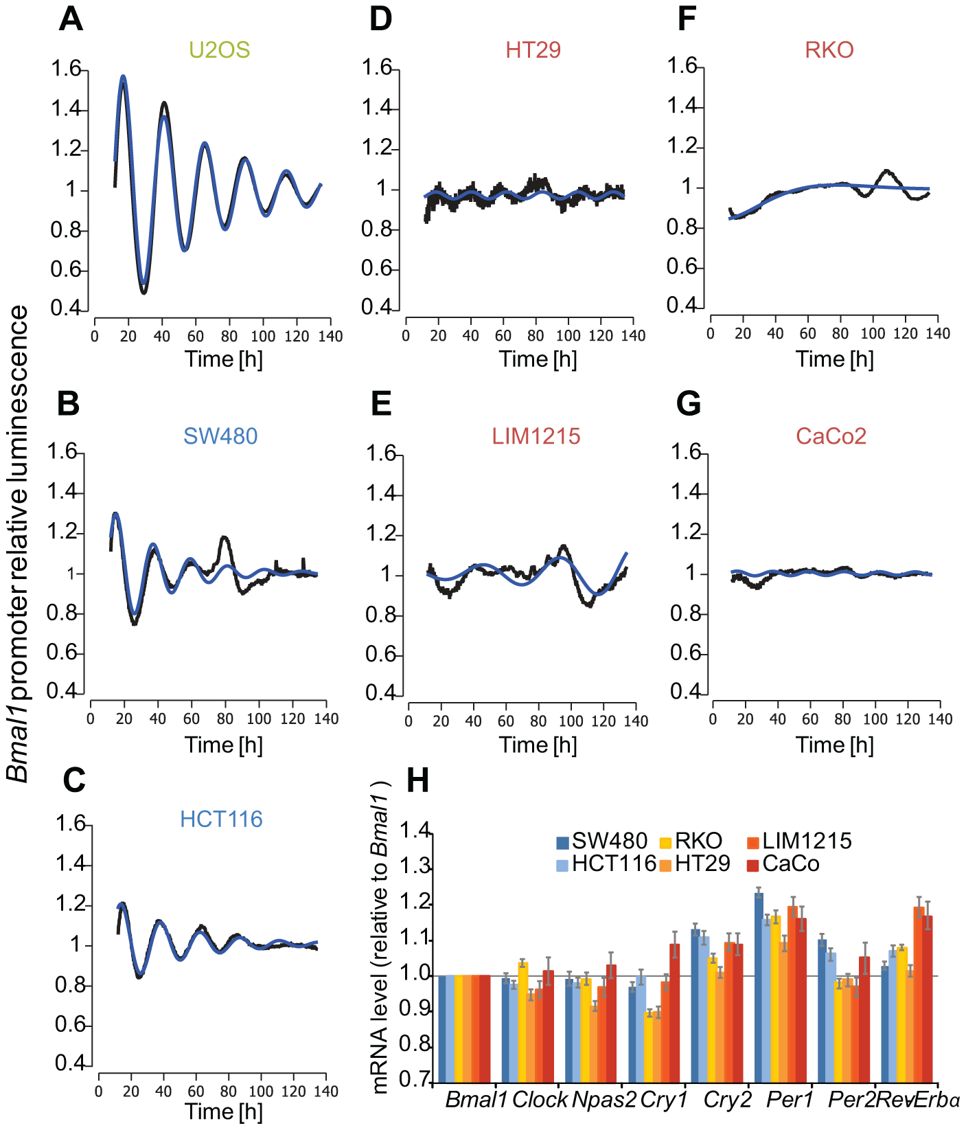 Clock phenotypes of colon cancer cell lines.
