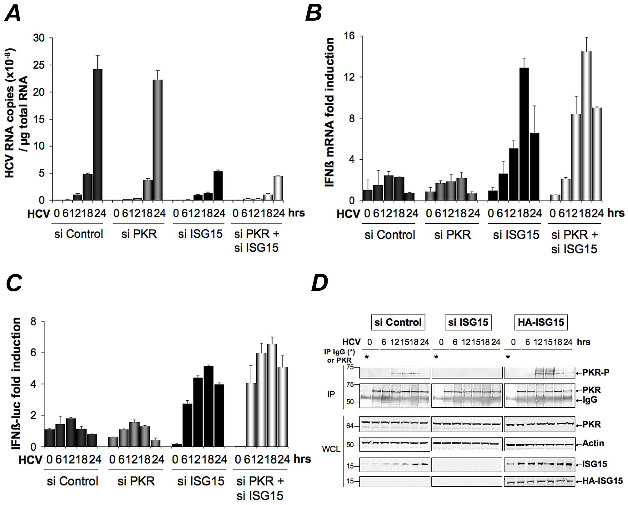 ISG15 strengthens the pro-HCV activity of PKR.