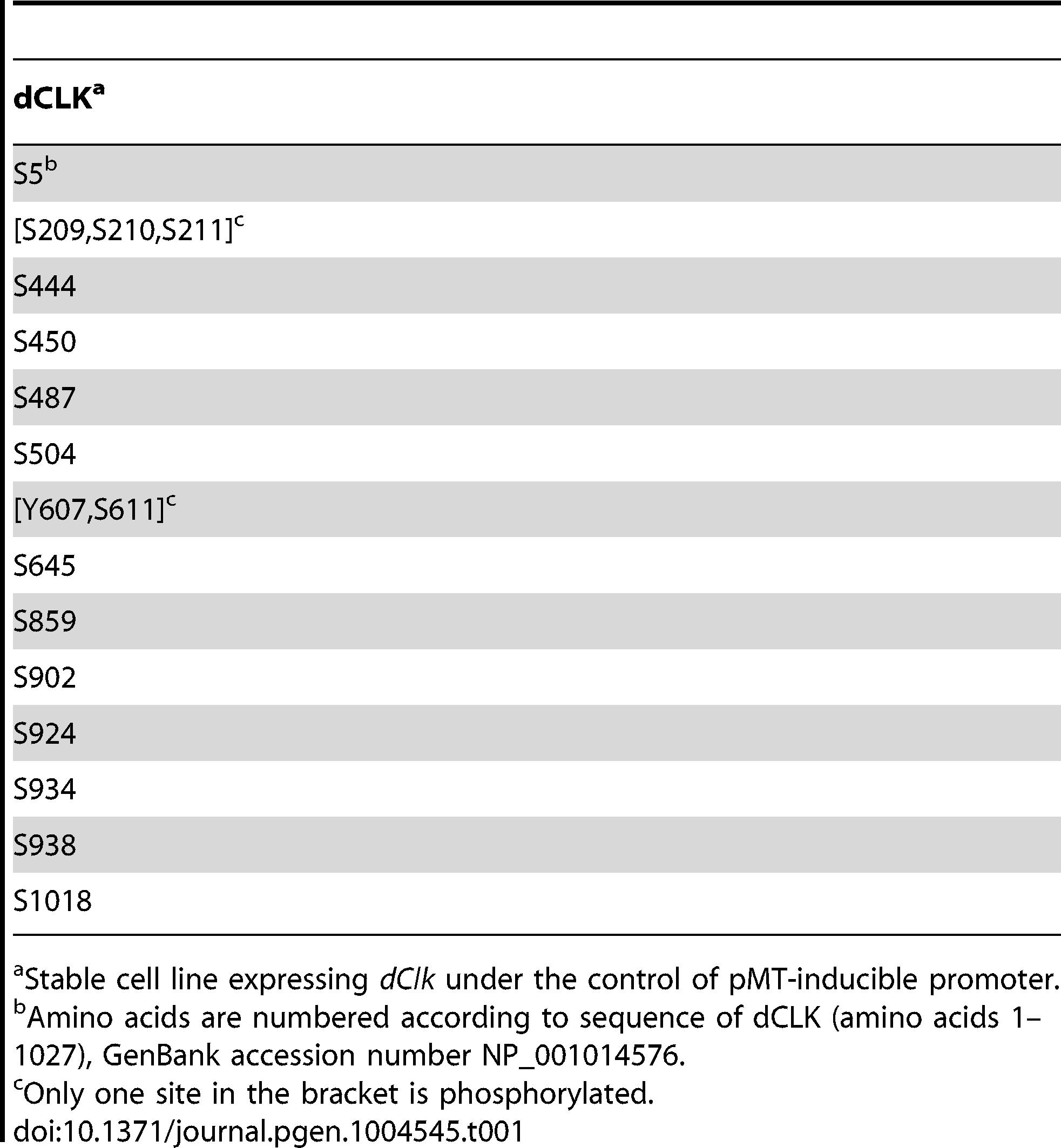 Identification of phosphorylation sites on dCLK produced in <i>Drosophila</i> S2 cells.