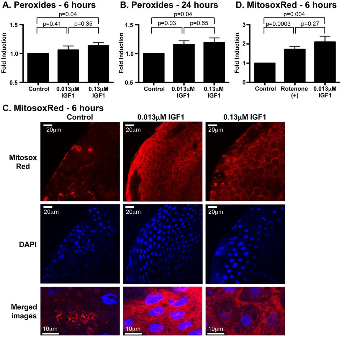 Ingested human IGF1 increased ROS levels in <i>A. stephensi</i> midguts.